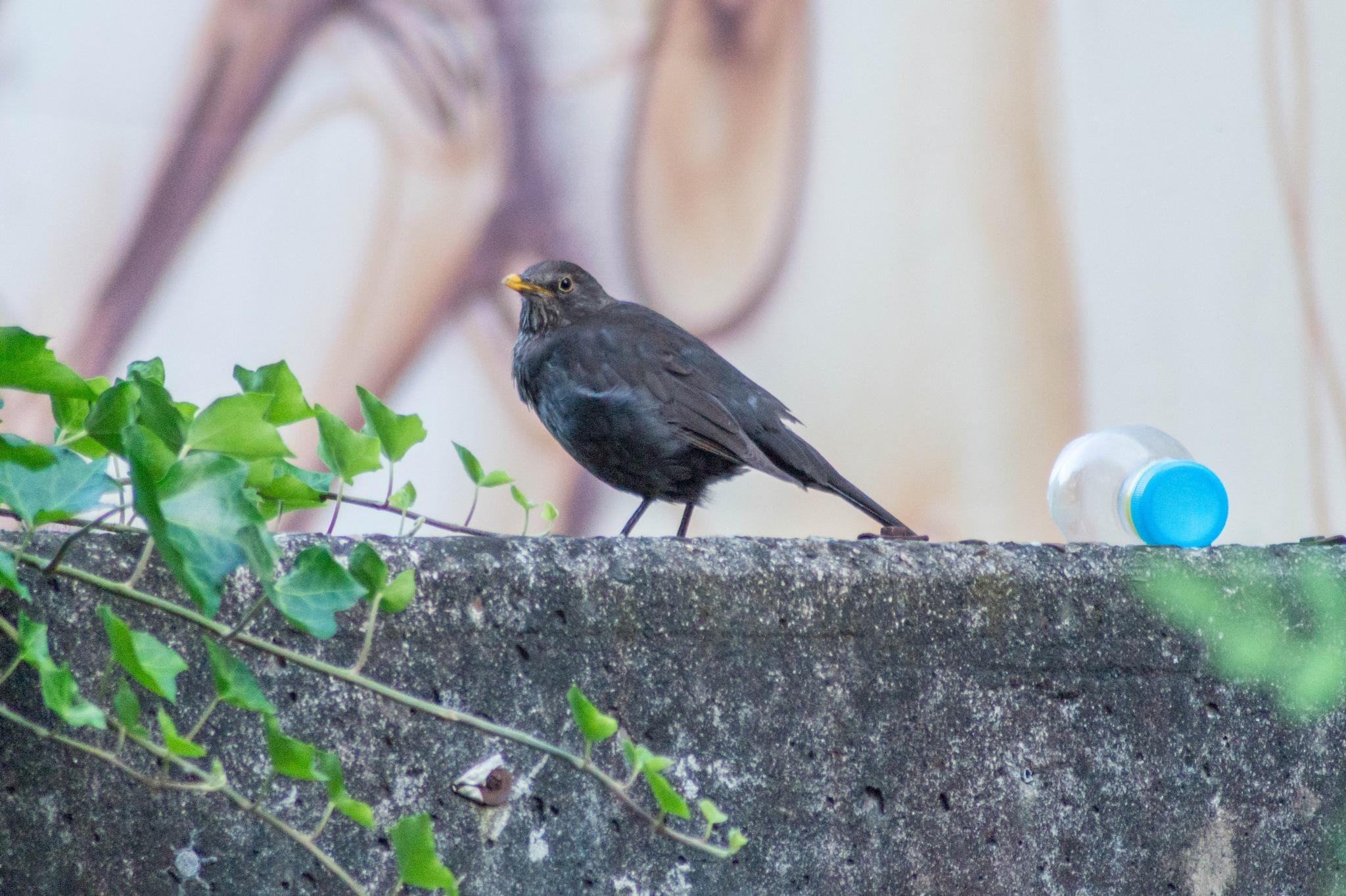 a bird on a wall by Marcelo Hernan Zimmt