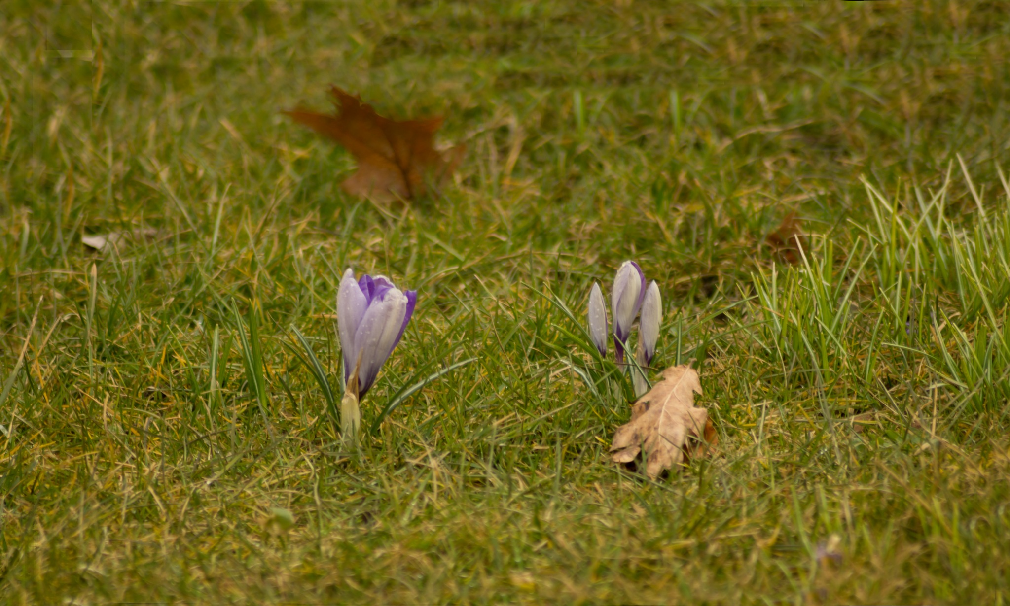 Start of spring by Marcelo Hernan Zimmt