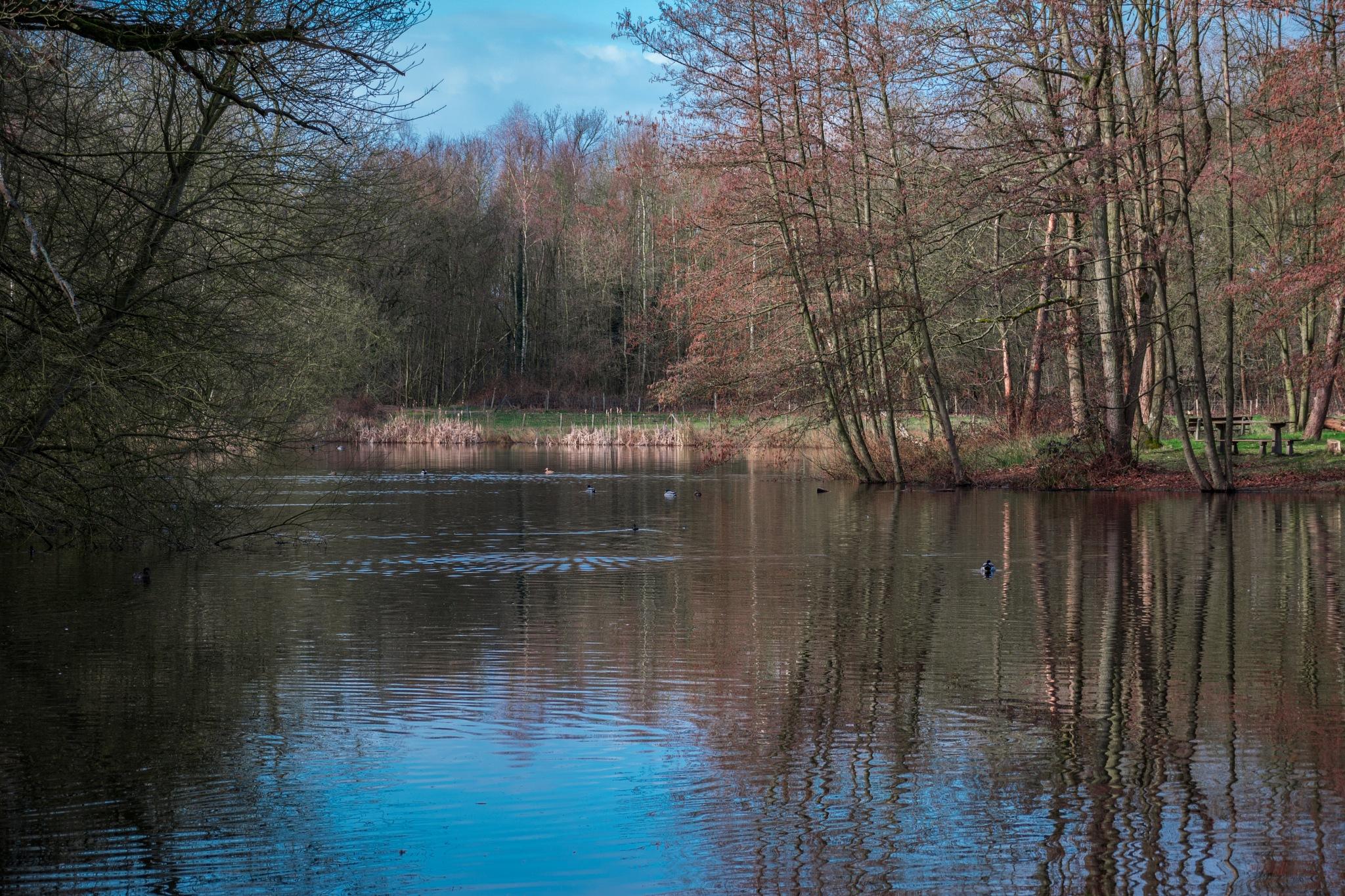 landschap  by Donny Zanders