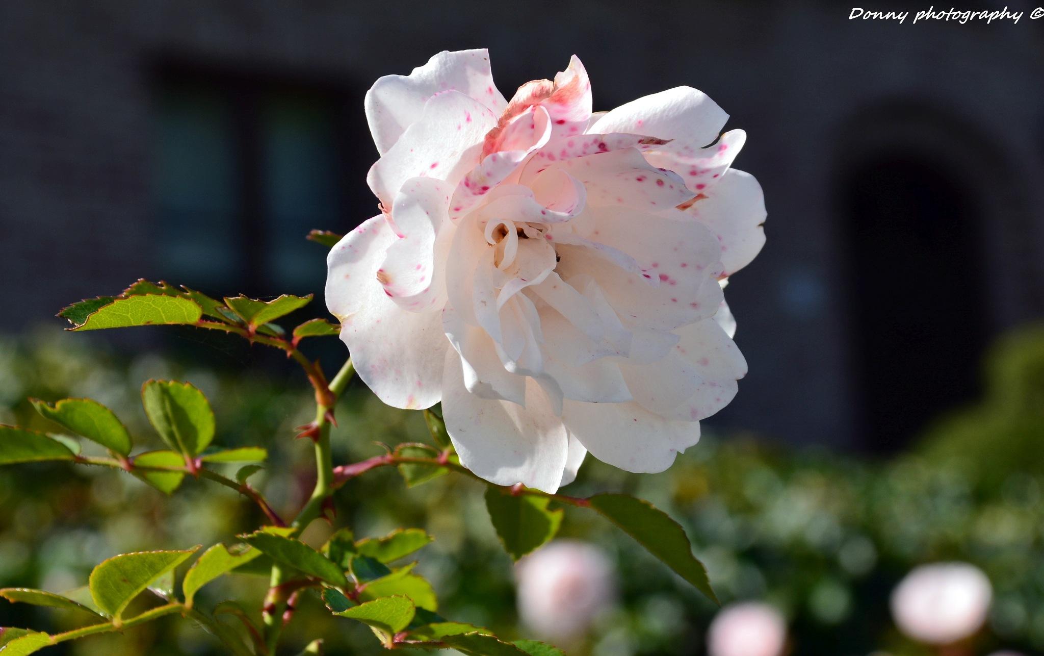 Mooie bloem  by Donny Zanders