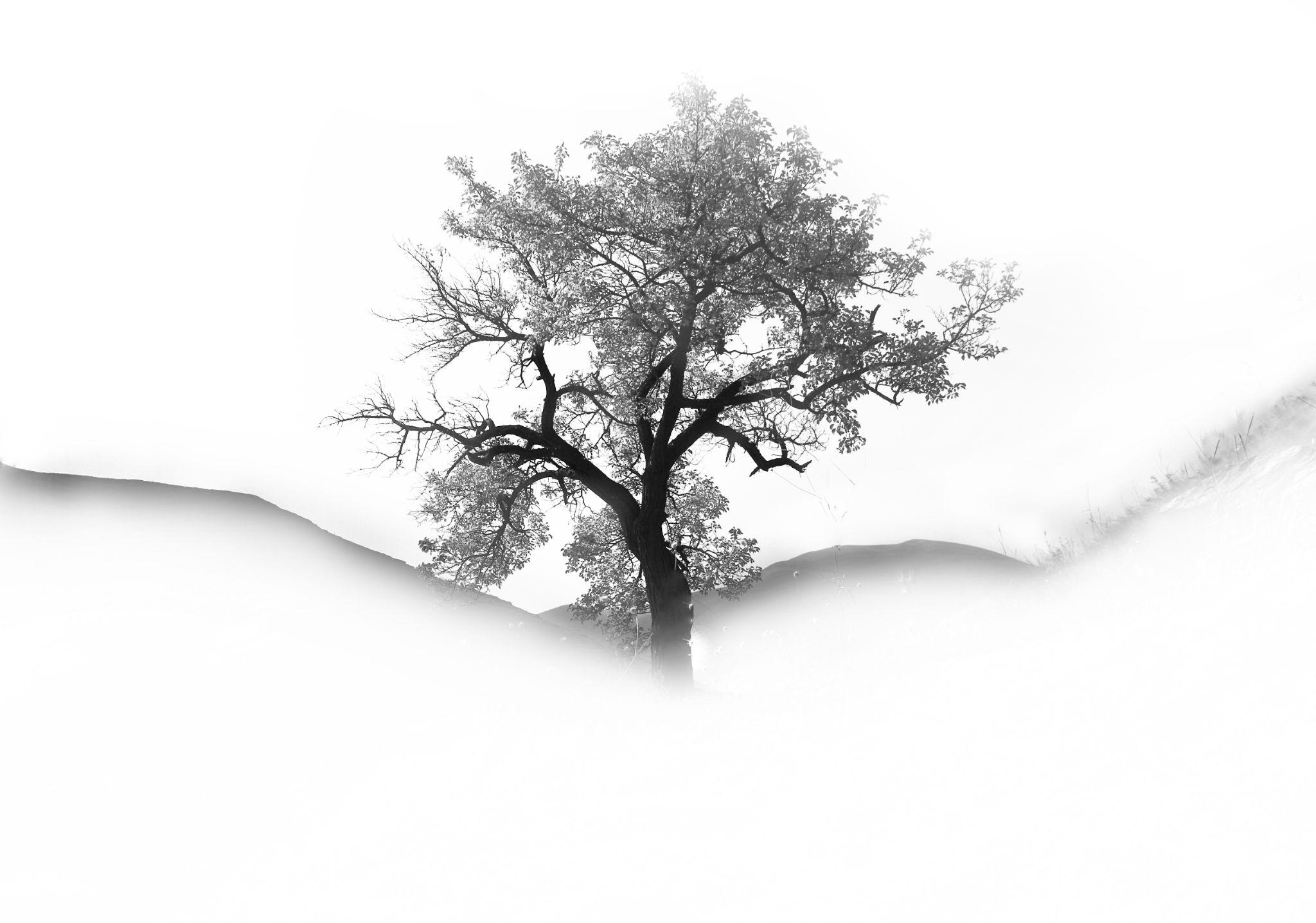 White by Pejman Pabarja