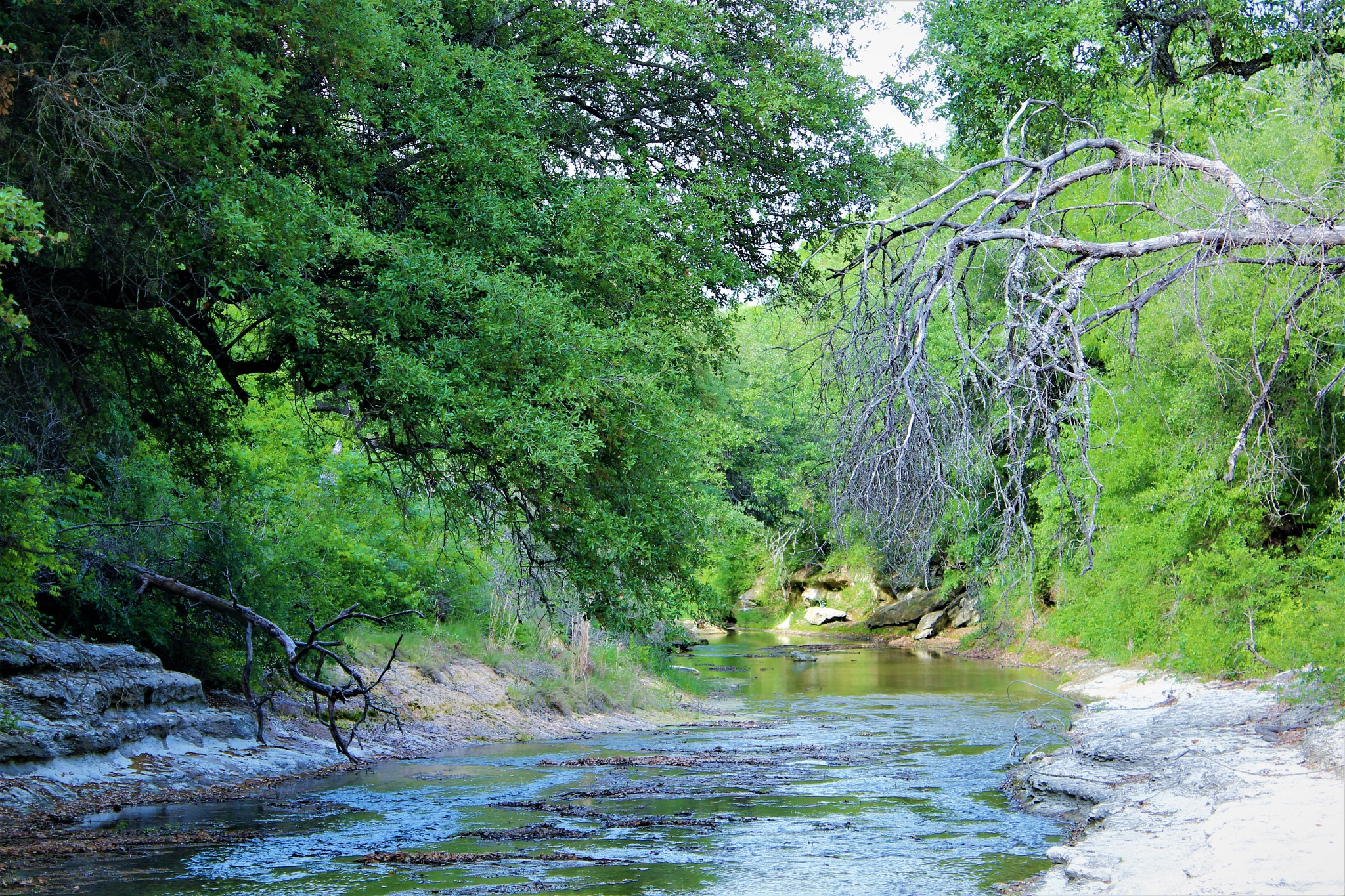 Creek by Poised Vision Pictorial Arts