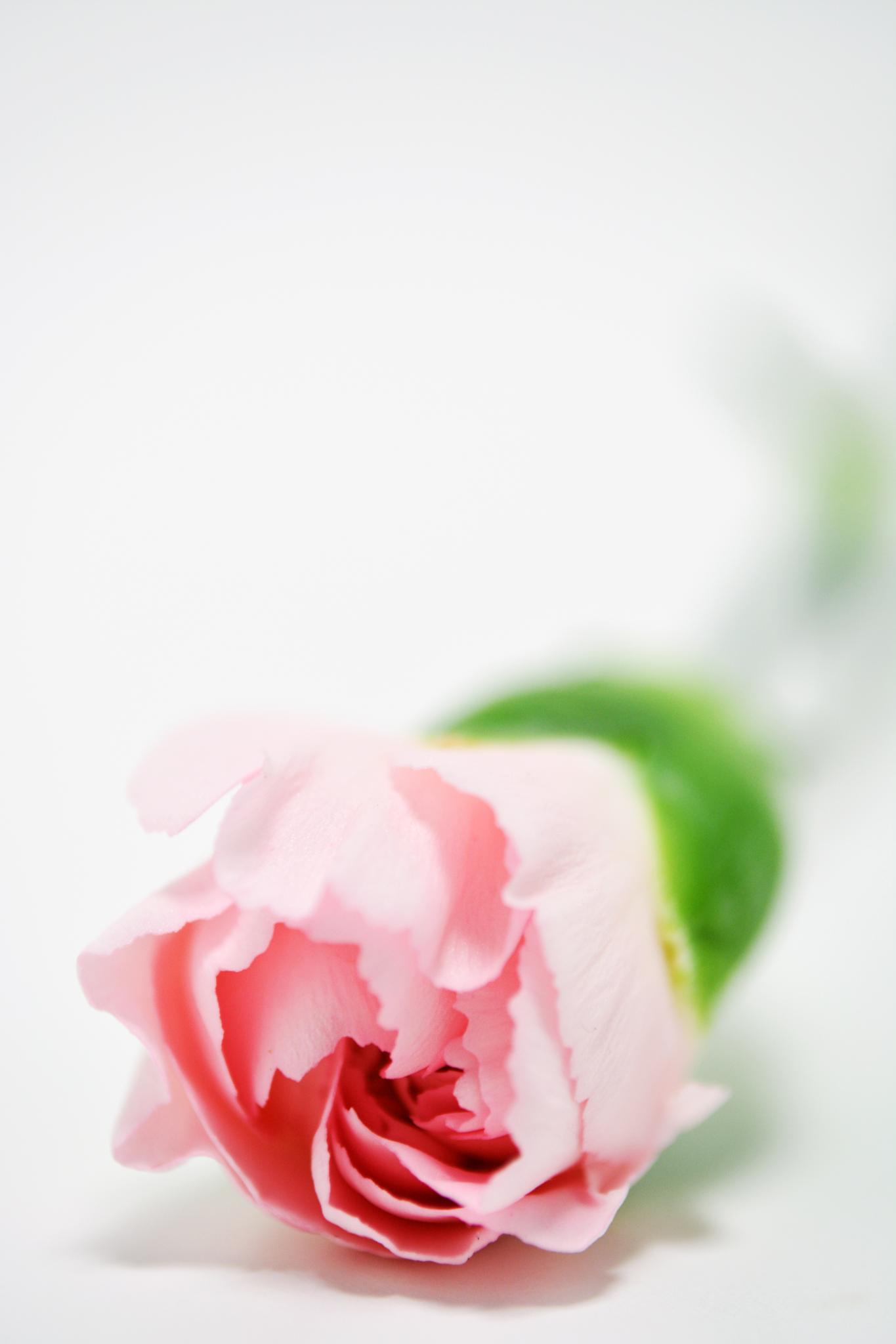 pink by karmel
