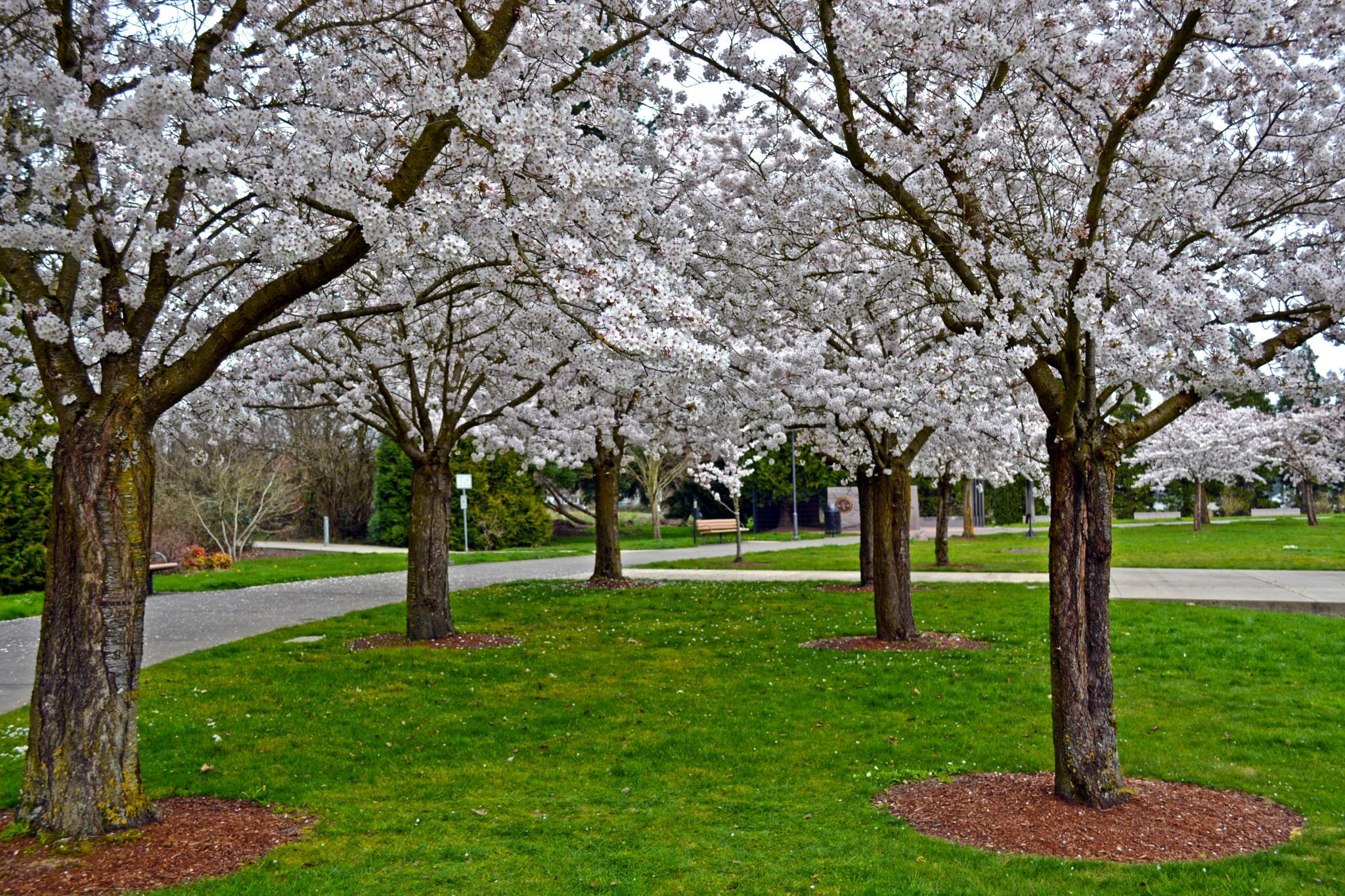 Trees by karmel