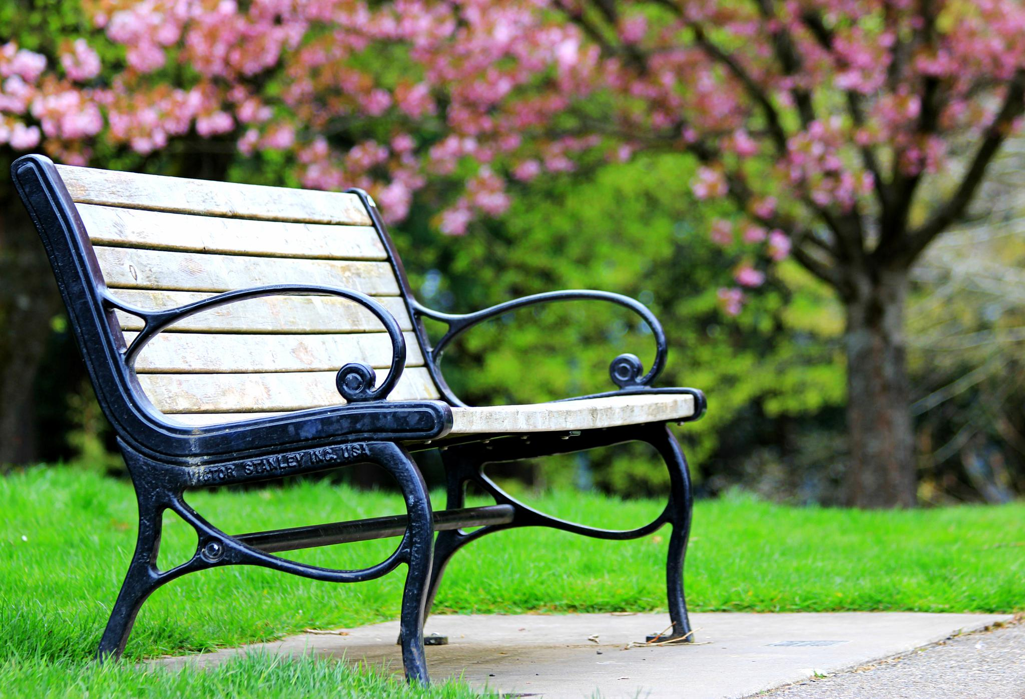 Lonely Bench by karmel