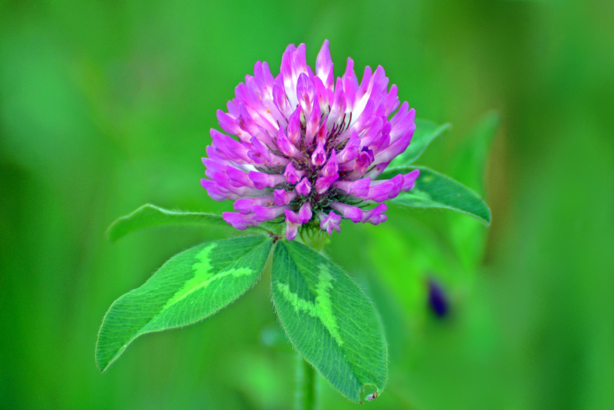 Purple flower by karmel
