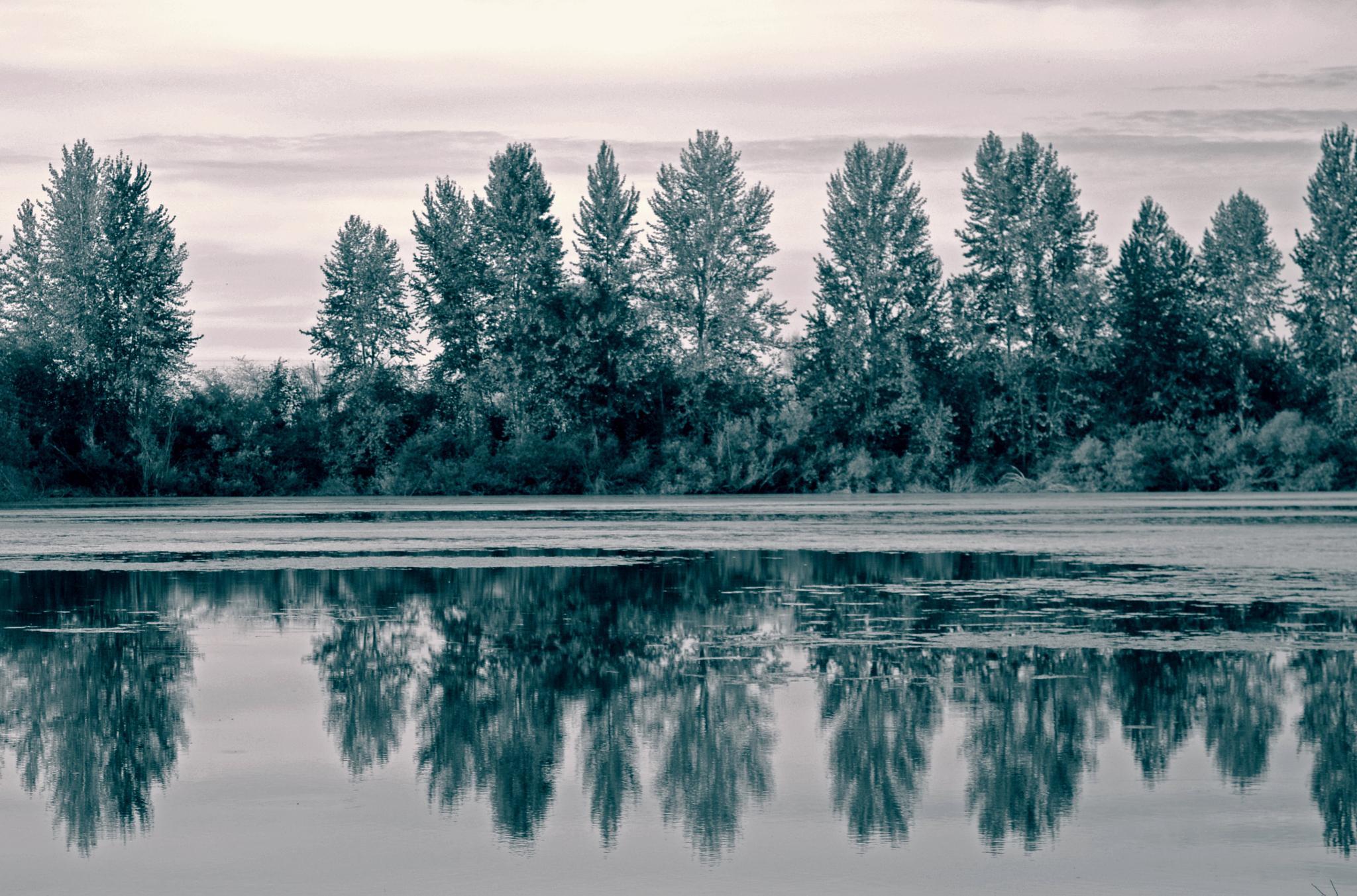 Reflection by karmel