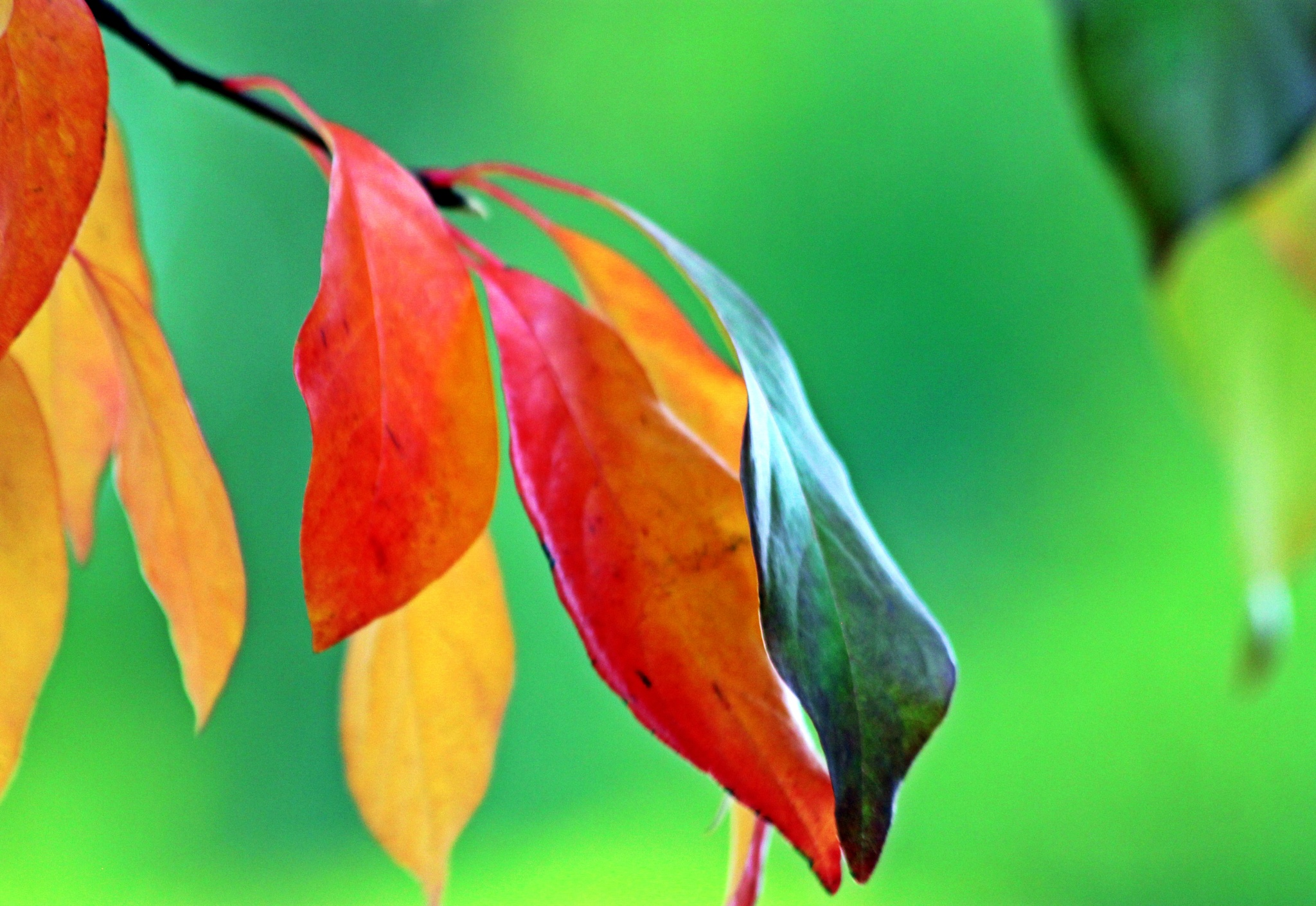 Fall Leaves by karmel