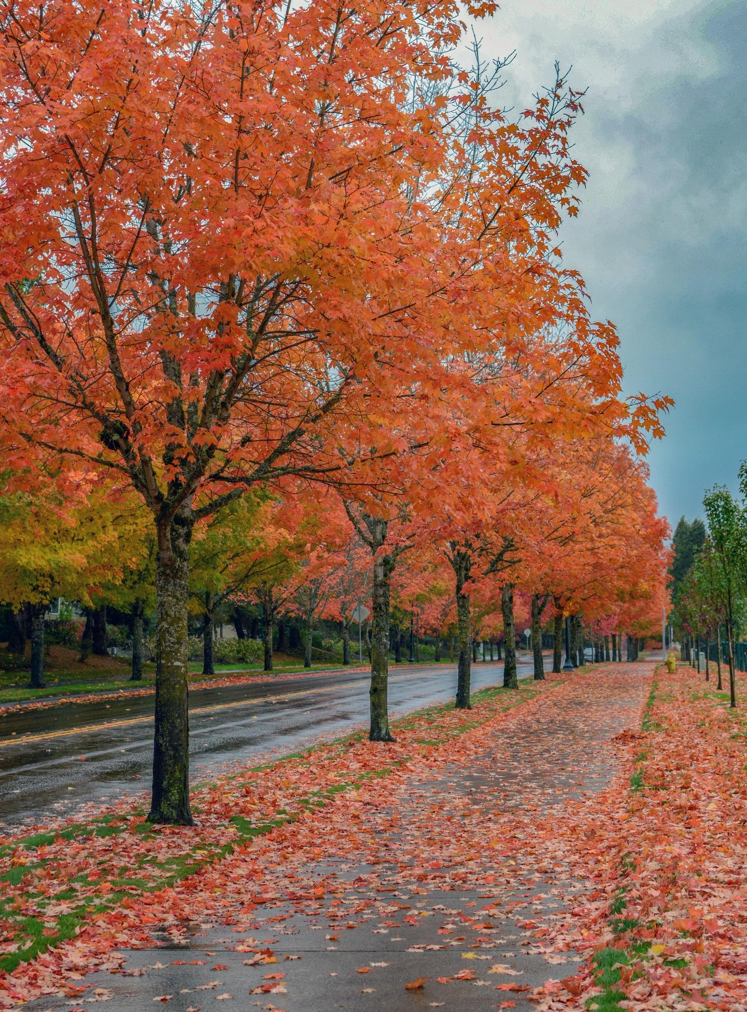 love love love autumn by karmel