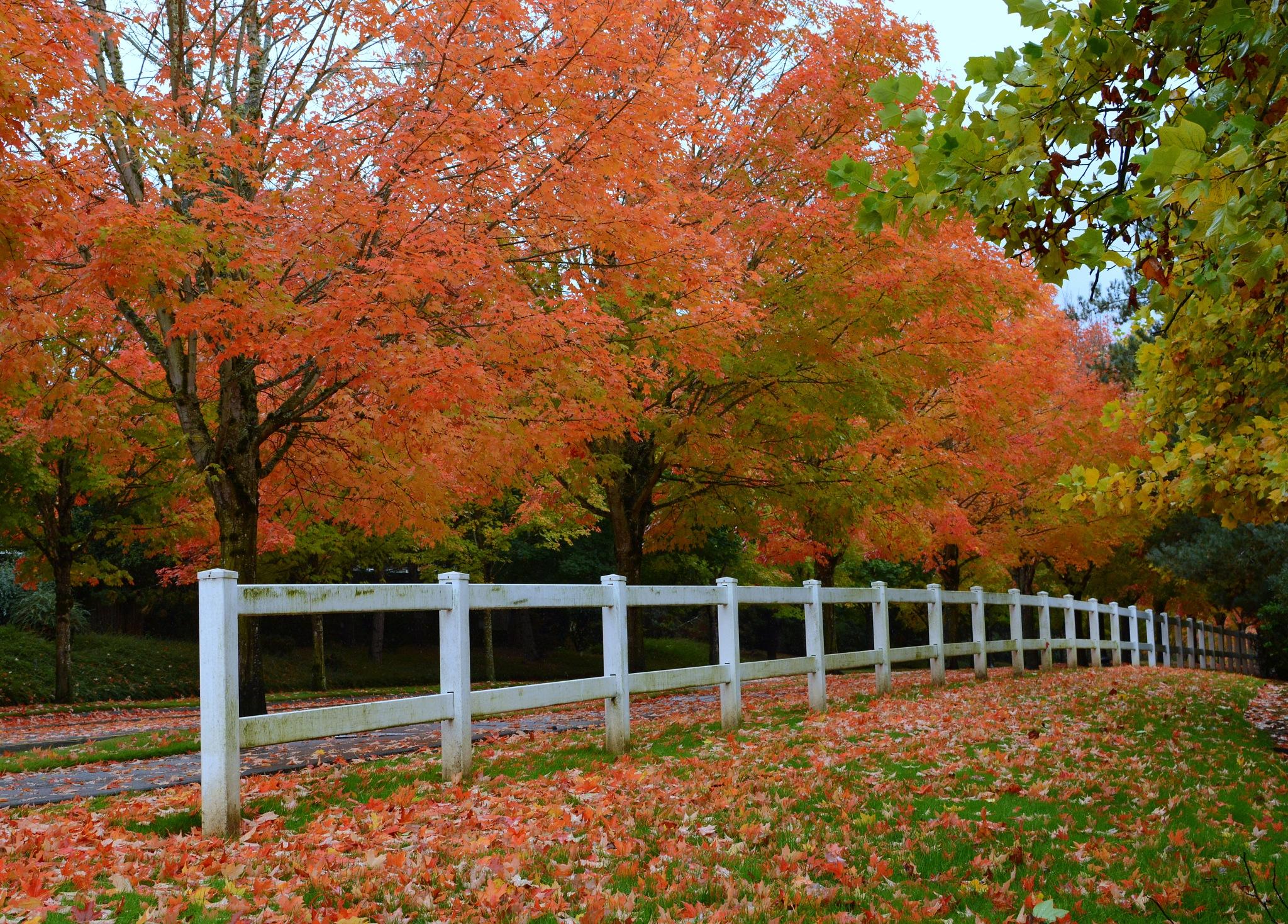Autumn Beauty by karmel