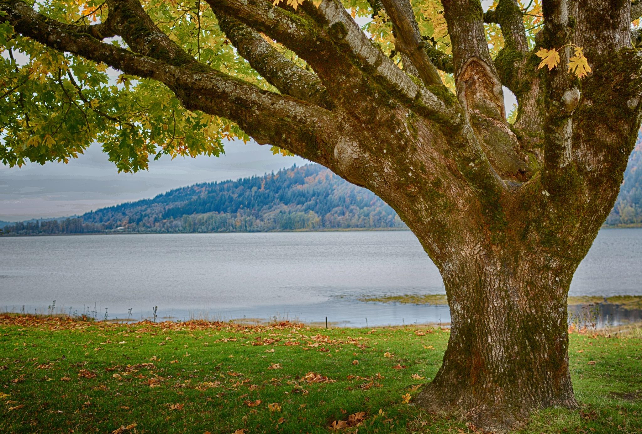 Tree by karmel