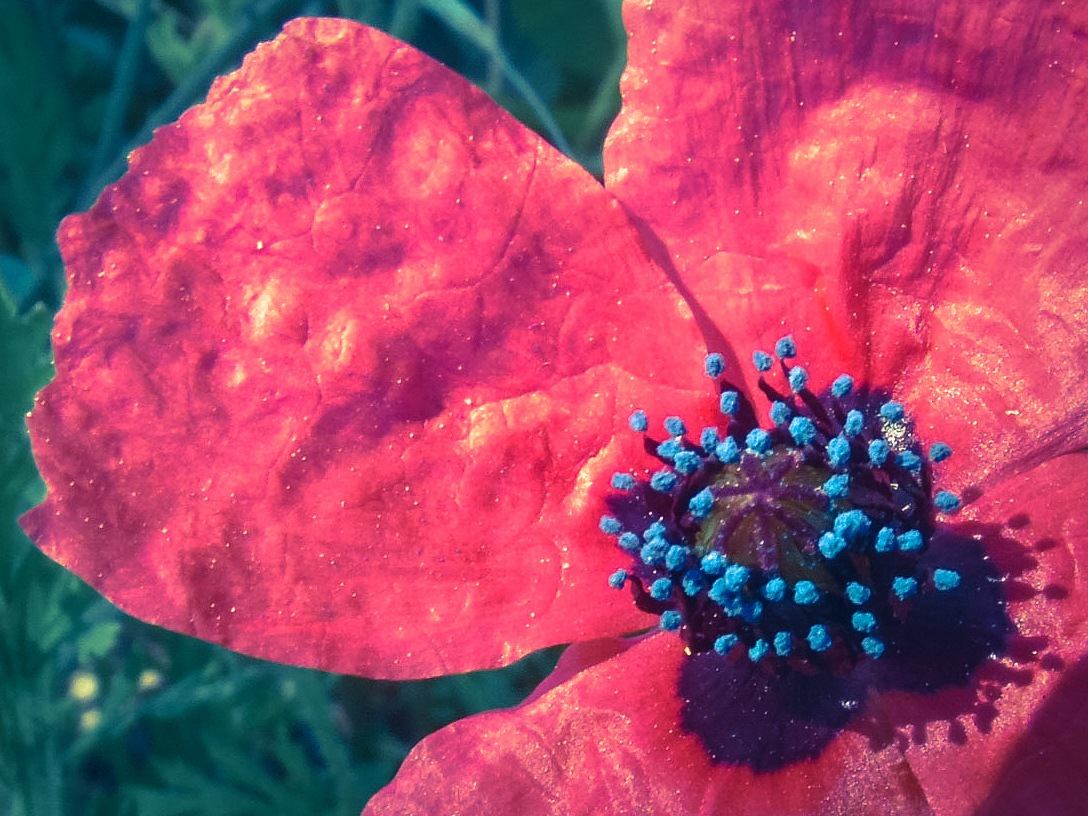 Red and Blue by Wounded Man