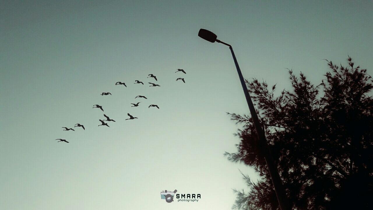 Untitled by Ahmed Ashraf