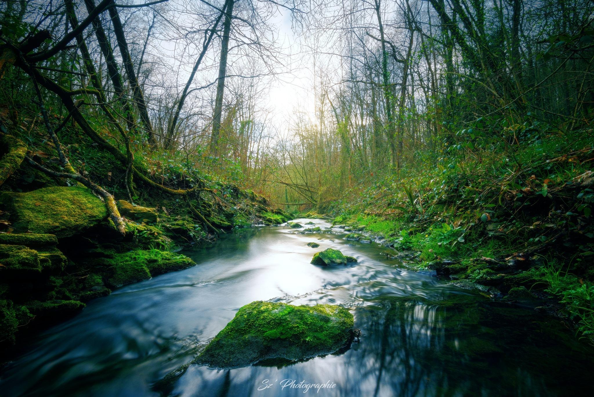 Green vegetation - Végétation bien verte by Sz' Photographie