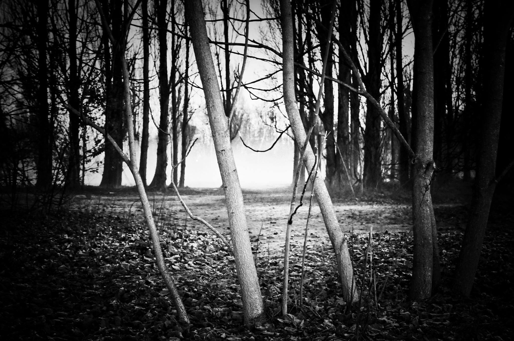 Untitled by Caroline Barberis