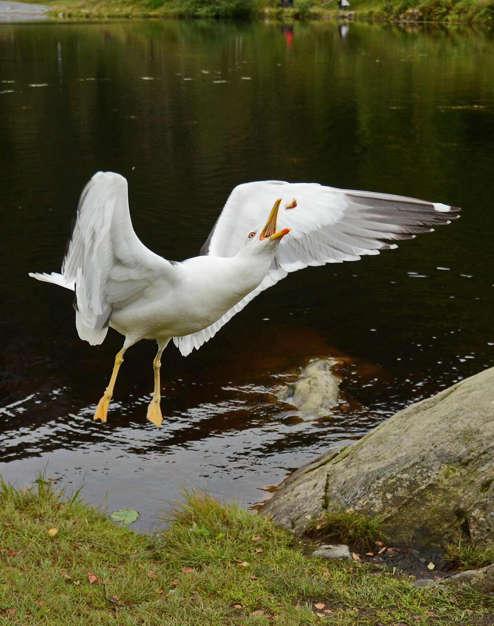 The seagull likes our homemade buns. by Per Molvik