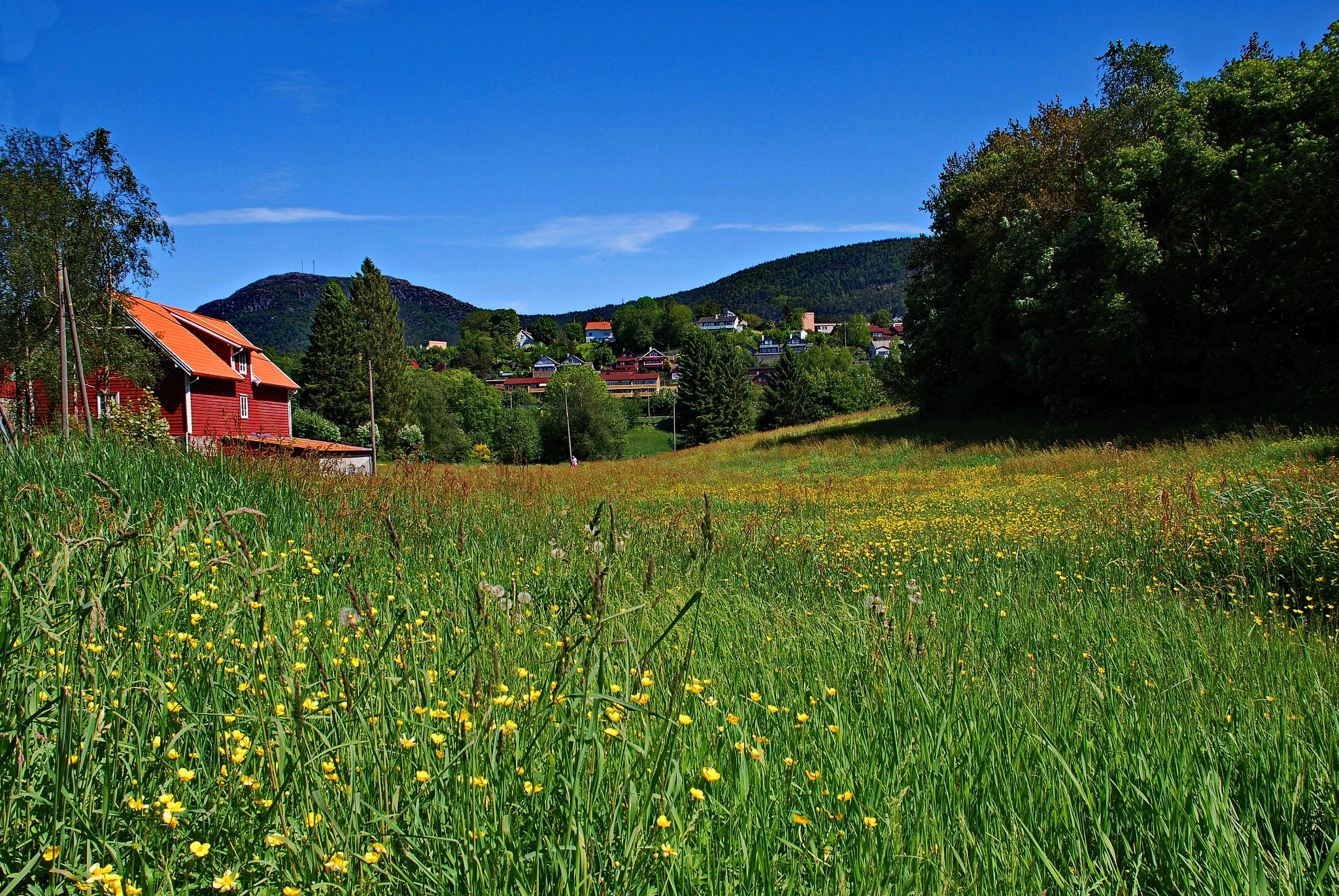 Summer meadow by Per Molvik