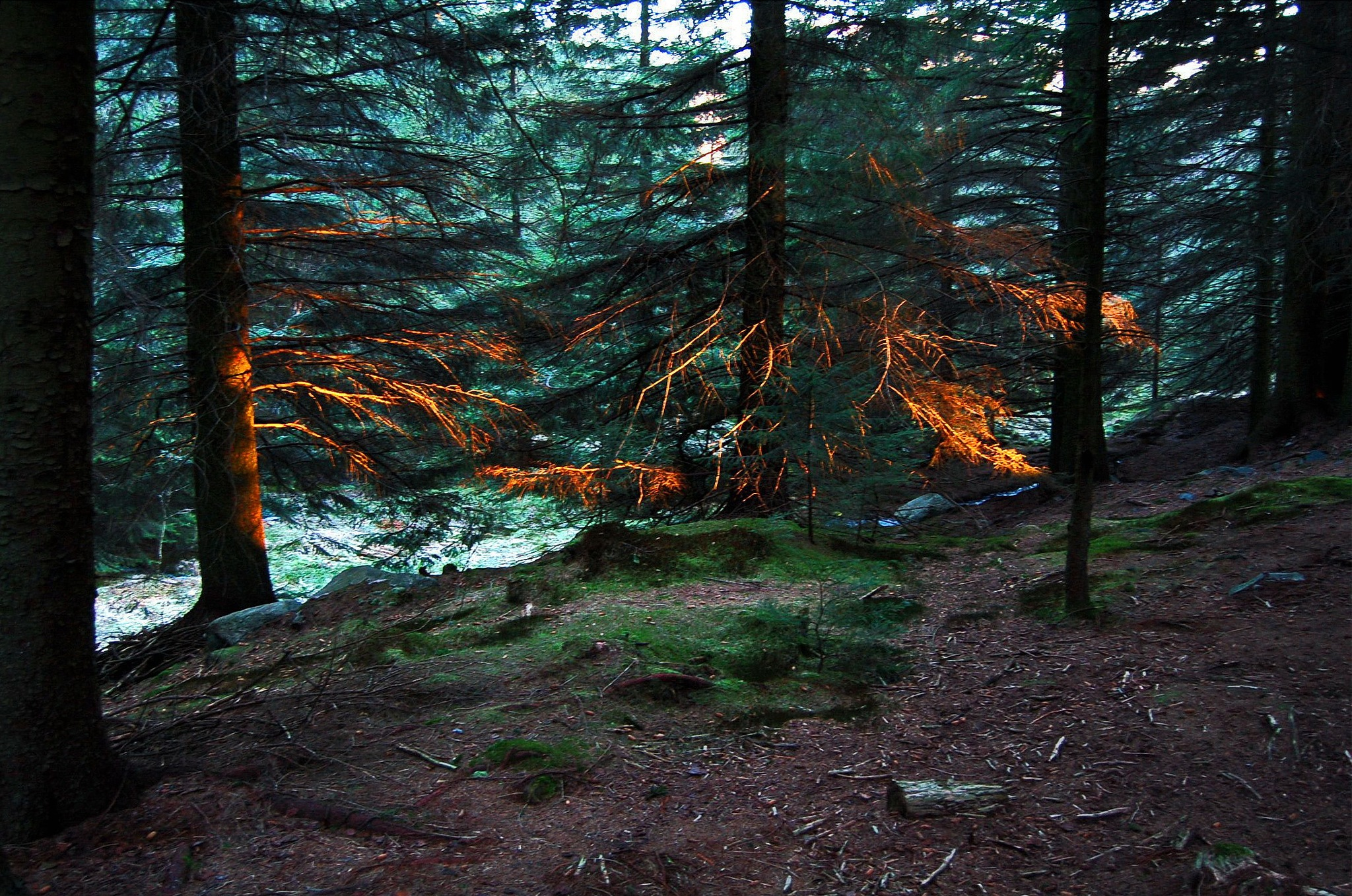 Sunbeams in the forest. by Per Molvik