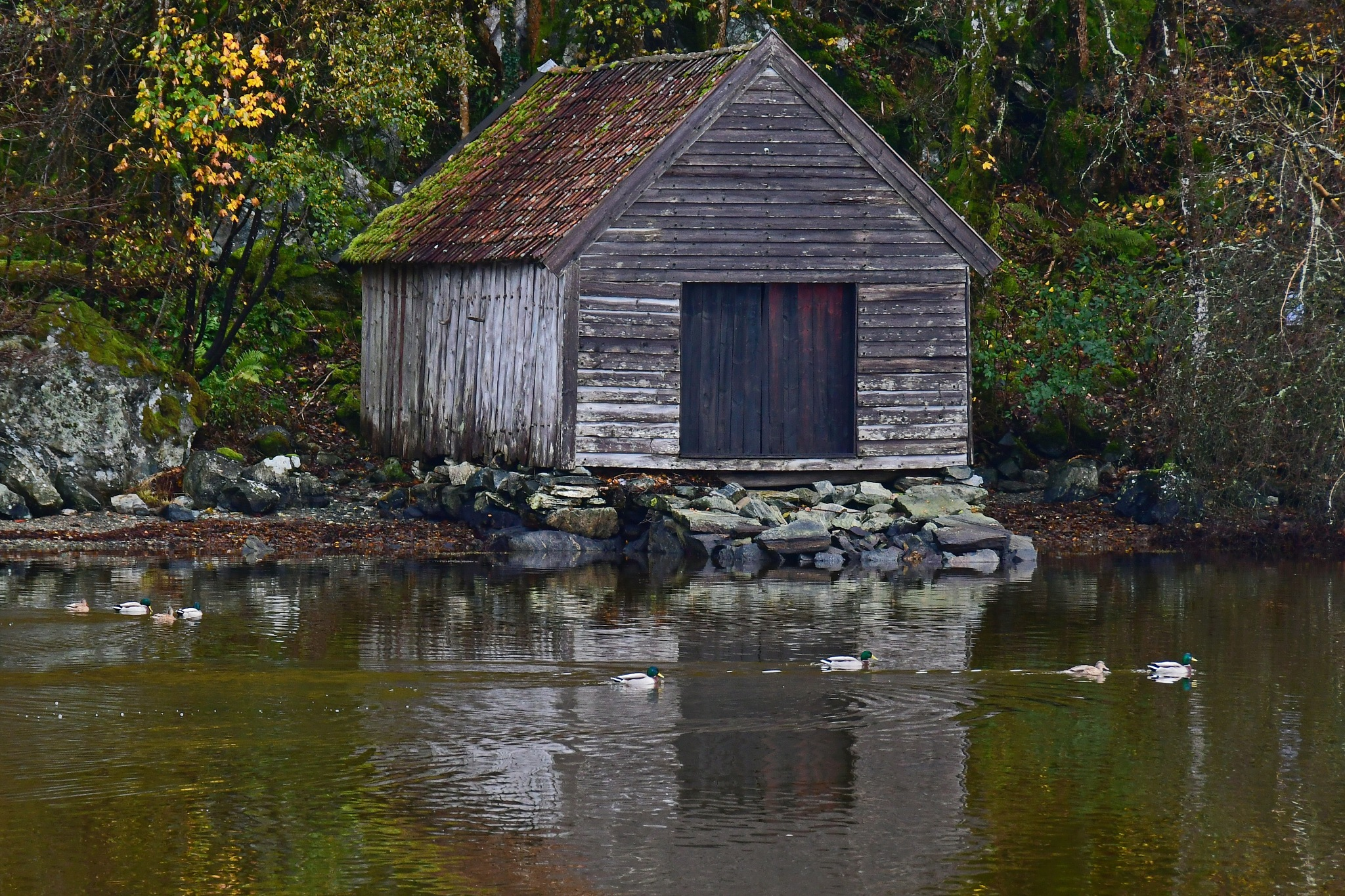 Boathouse in autumn colors by Per Molvik