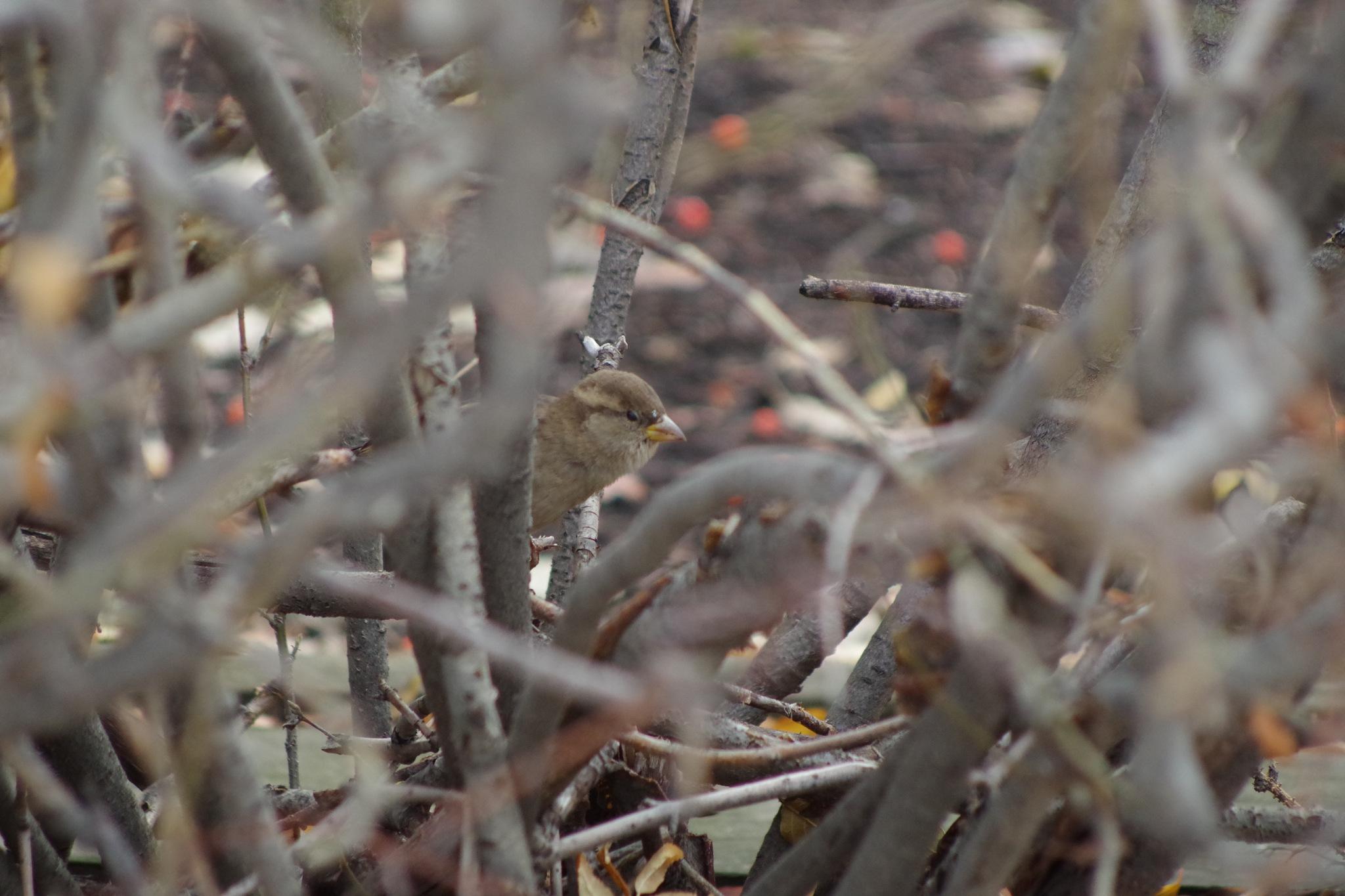 A Bird in the Bush by CudtzMedia