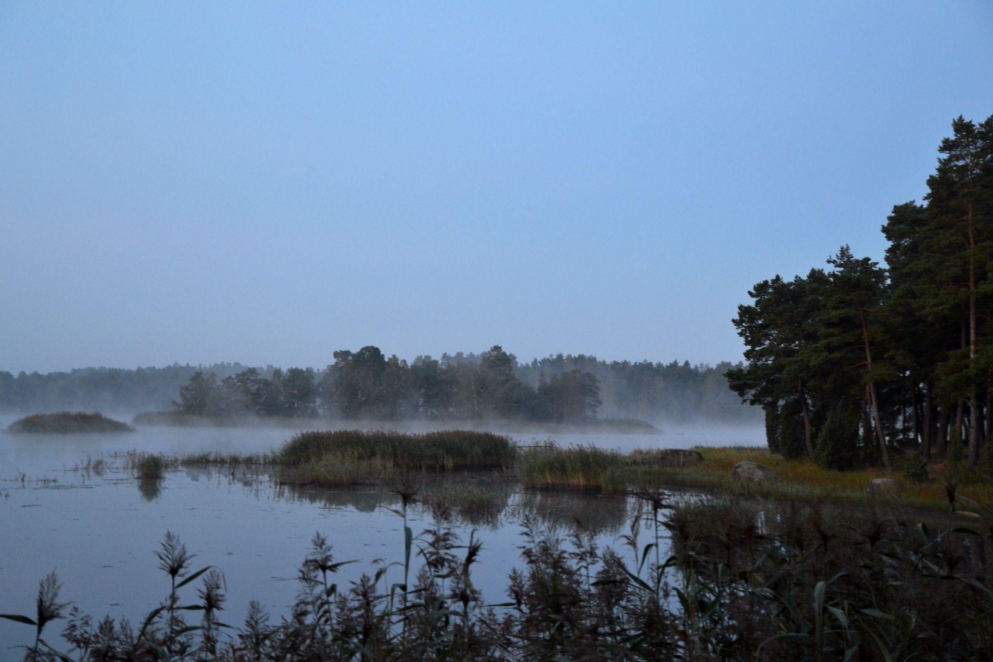 A foggy morning  by Lisa von Steijern