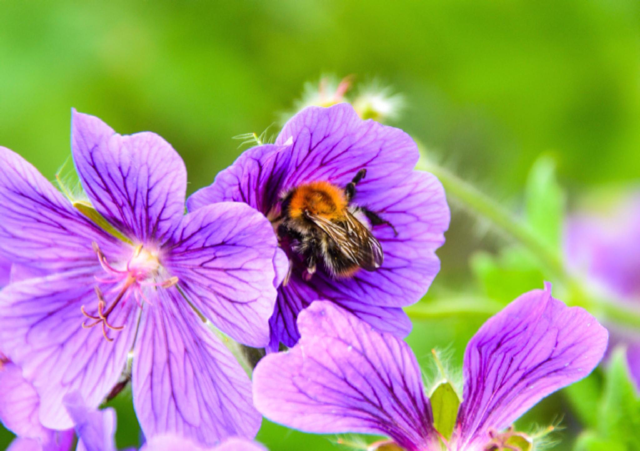 Busy Bumblebee  by Lisa von Steijern
