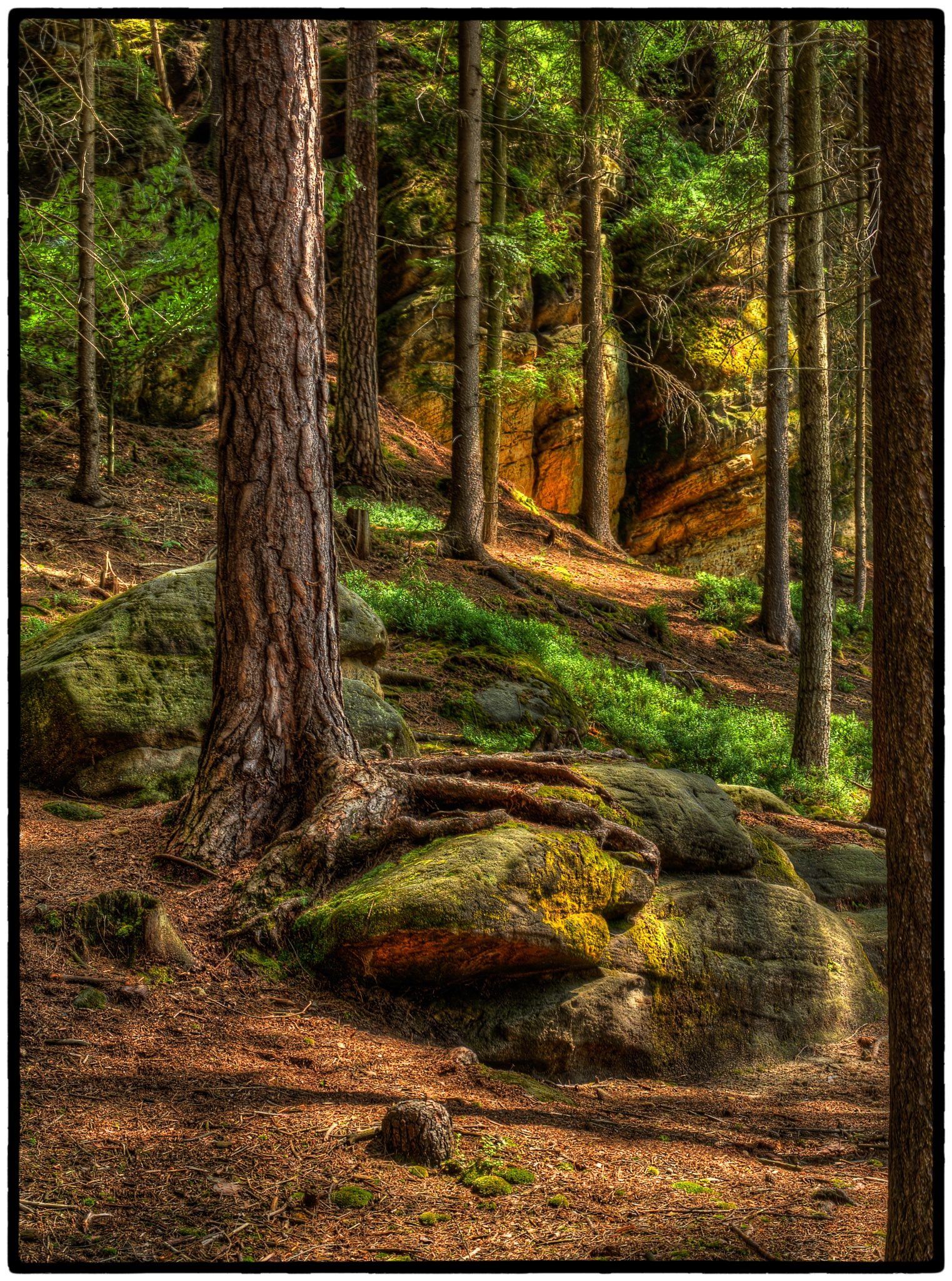 Light in the forest by Klaus von Jansdorf