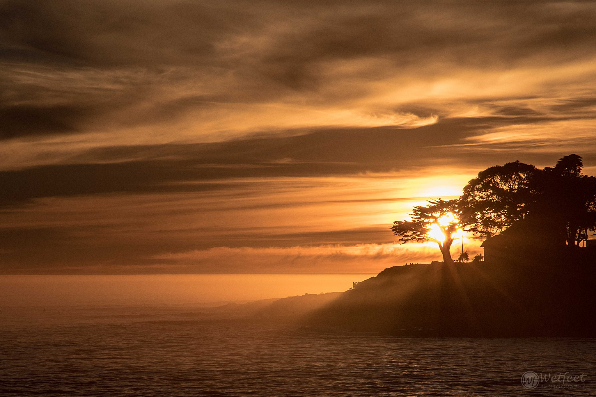 Lighted Cypress by Wetfeet Photography