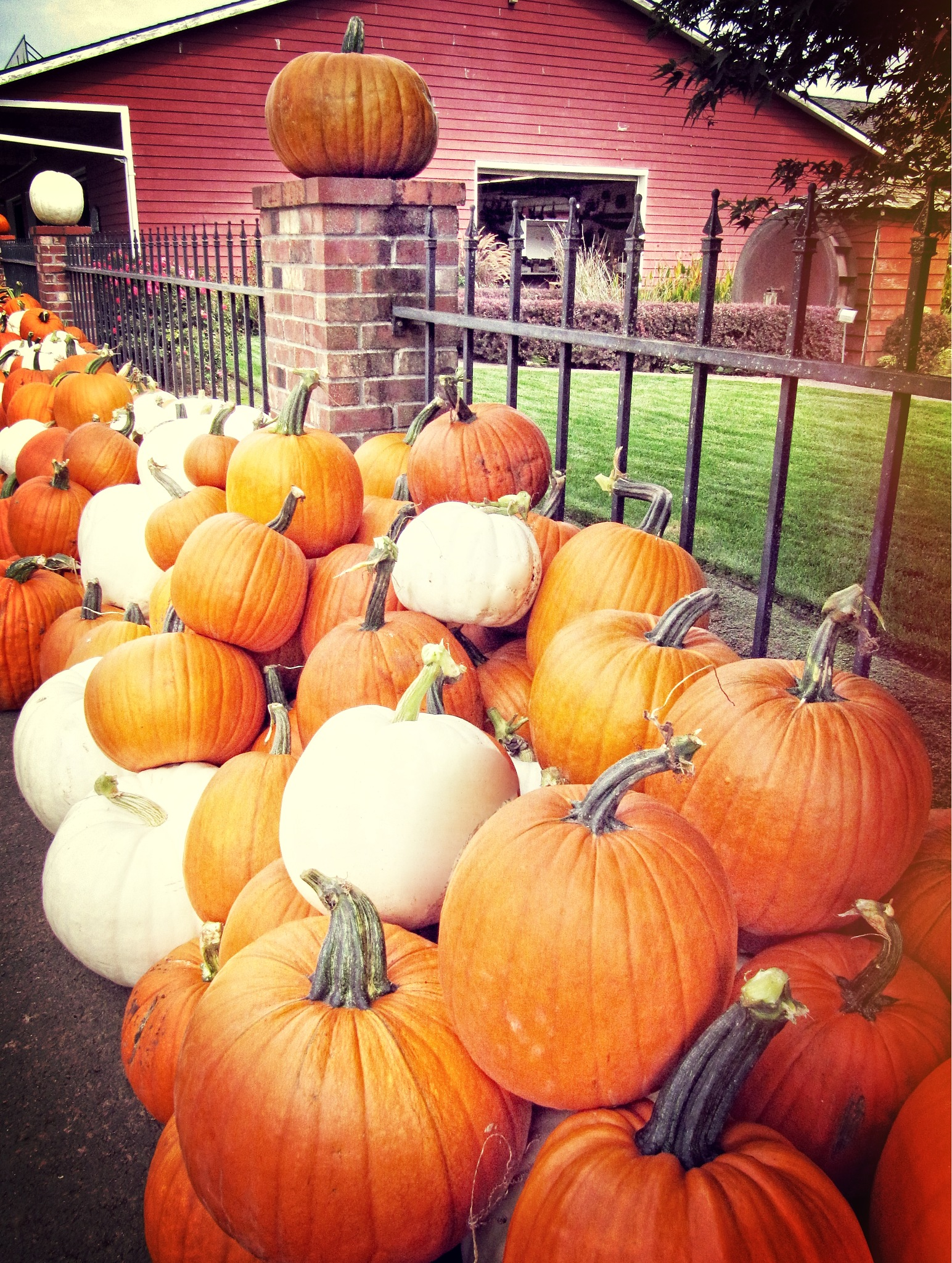 Pumpkins at the Farm by RenfroPhotography
