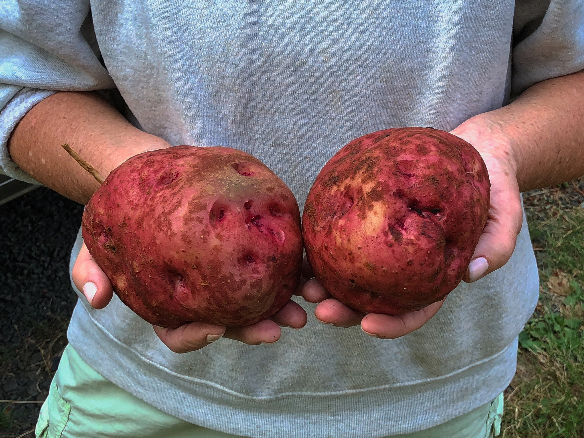 Red Potatoes by RenfroPhotography