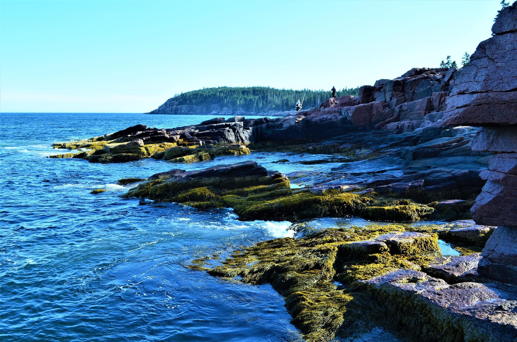 Fishing off the Rocks in Acadia National Park, Maine by Sheri Fresonke Harper