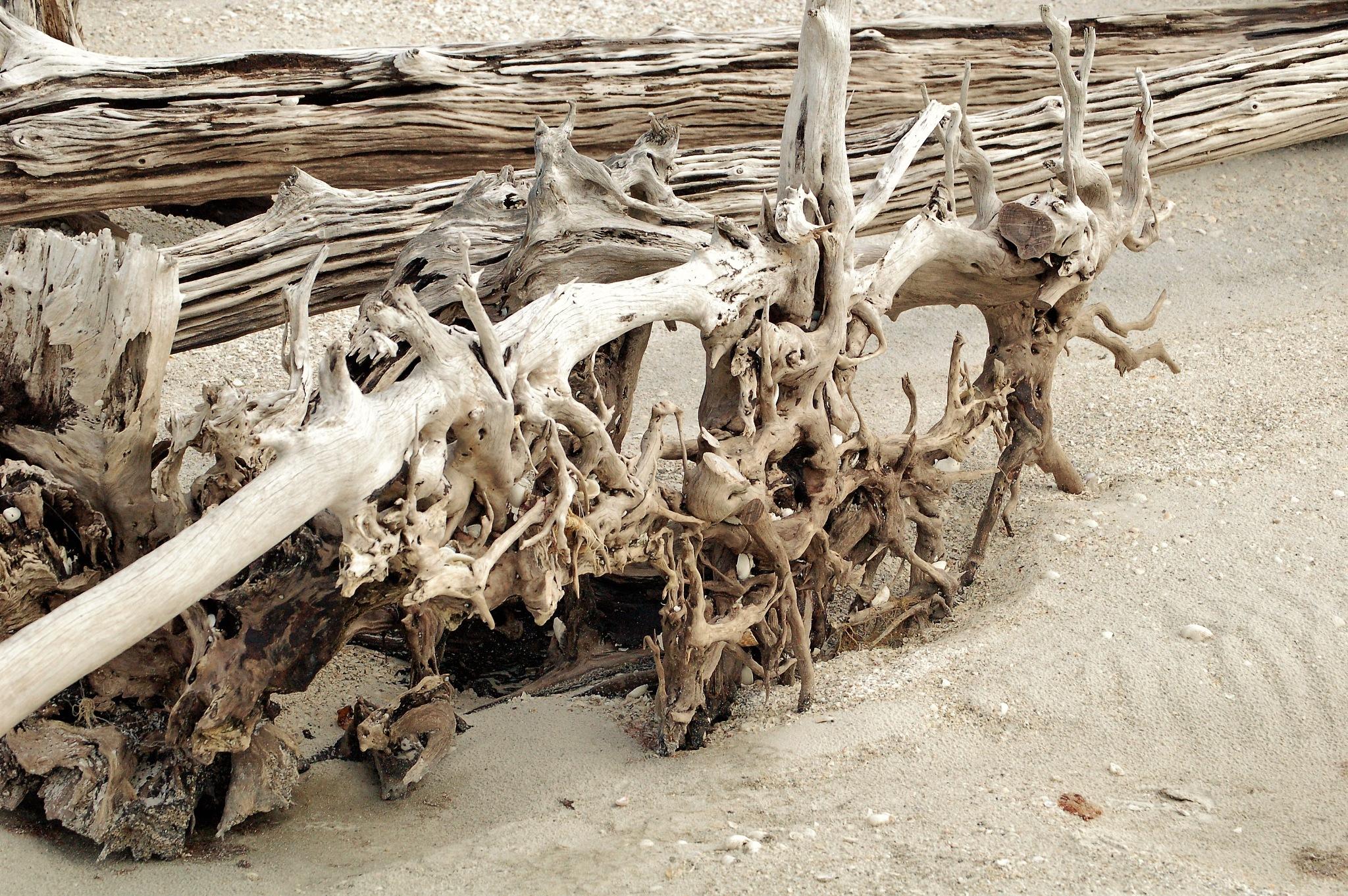 Driftwood at Lover's Key National Park, Florida by Sheri Fresonke Harper