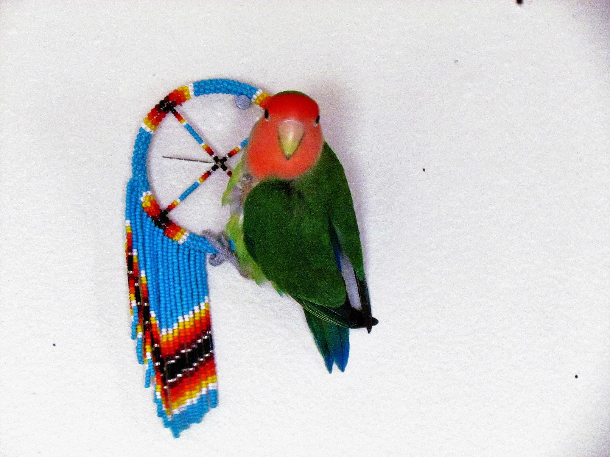 Lovebird on a dreamcatcher by estherlarge