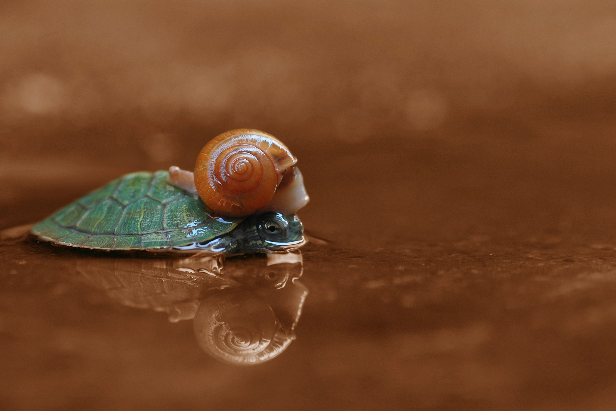 Snail End Turtle by ujangwahyudin