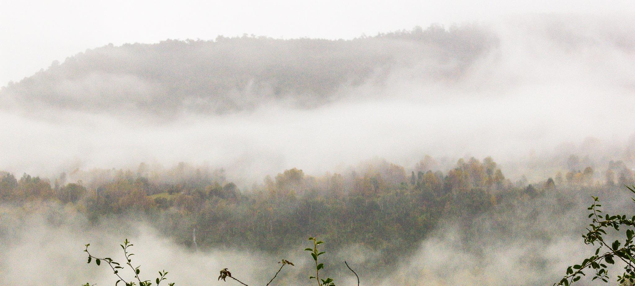 Niebla by ecamus