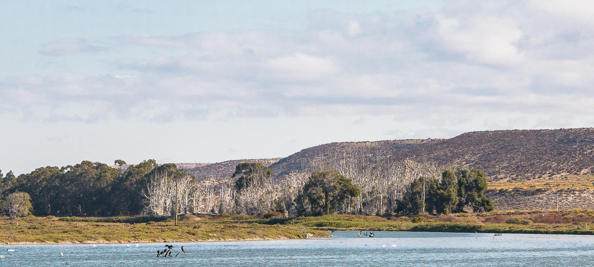 Humedal en Tongoy by ecamus