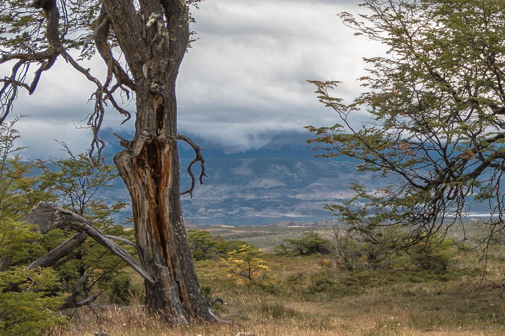 Puerto Natales by ecamus