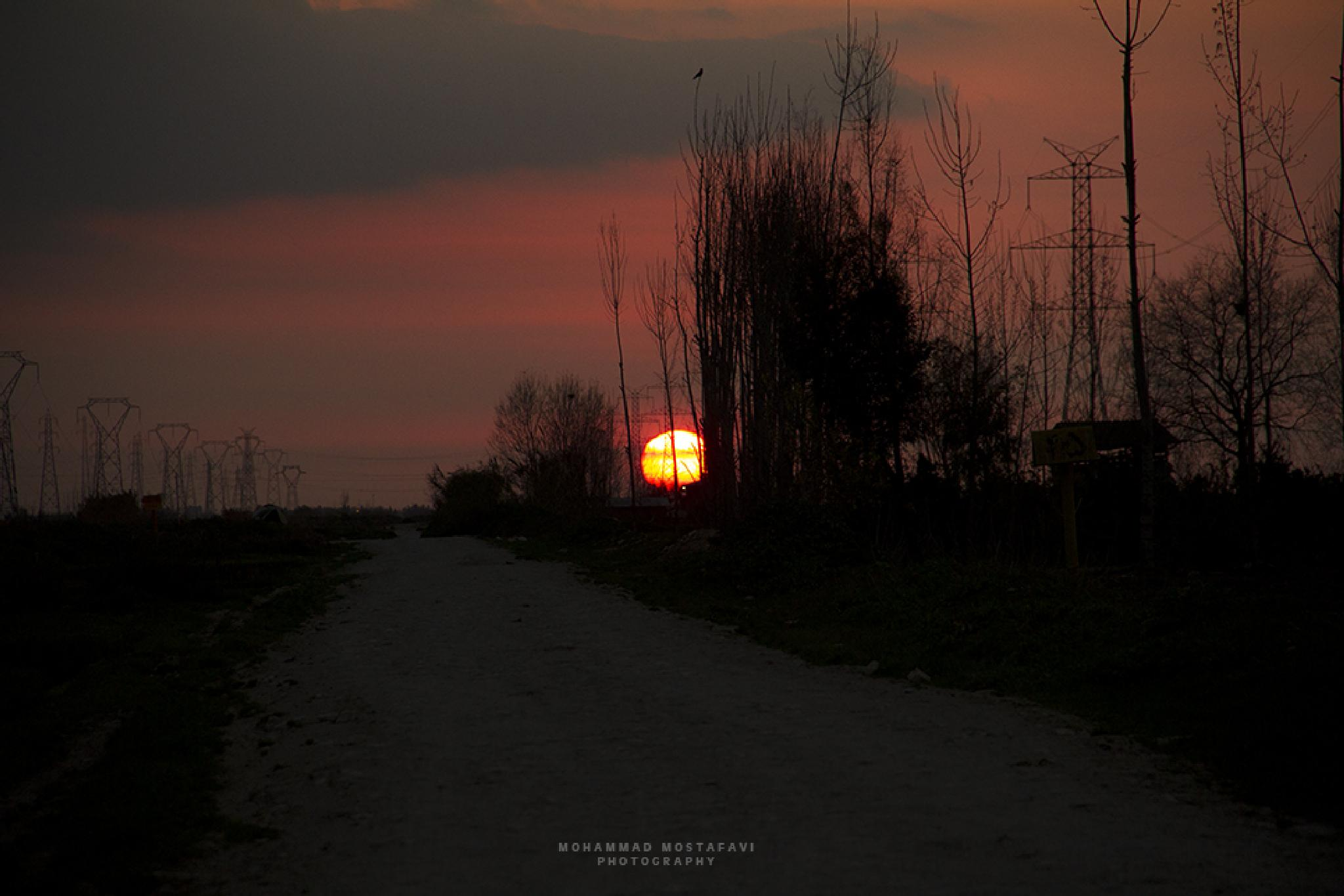 Road to Love by Mohammad Mostafavi