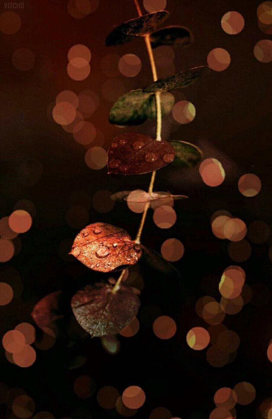 Untitled by Bouchareb Karim