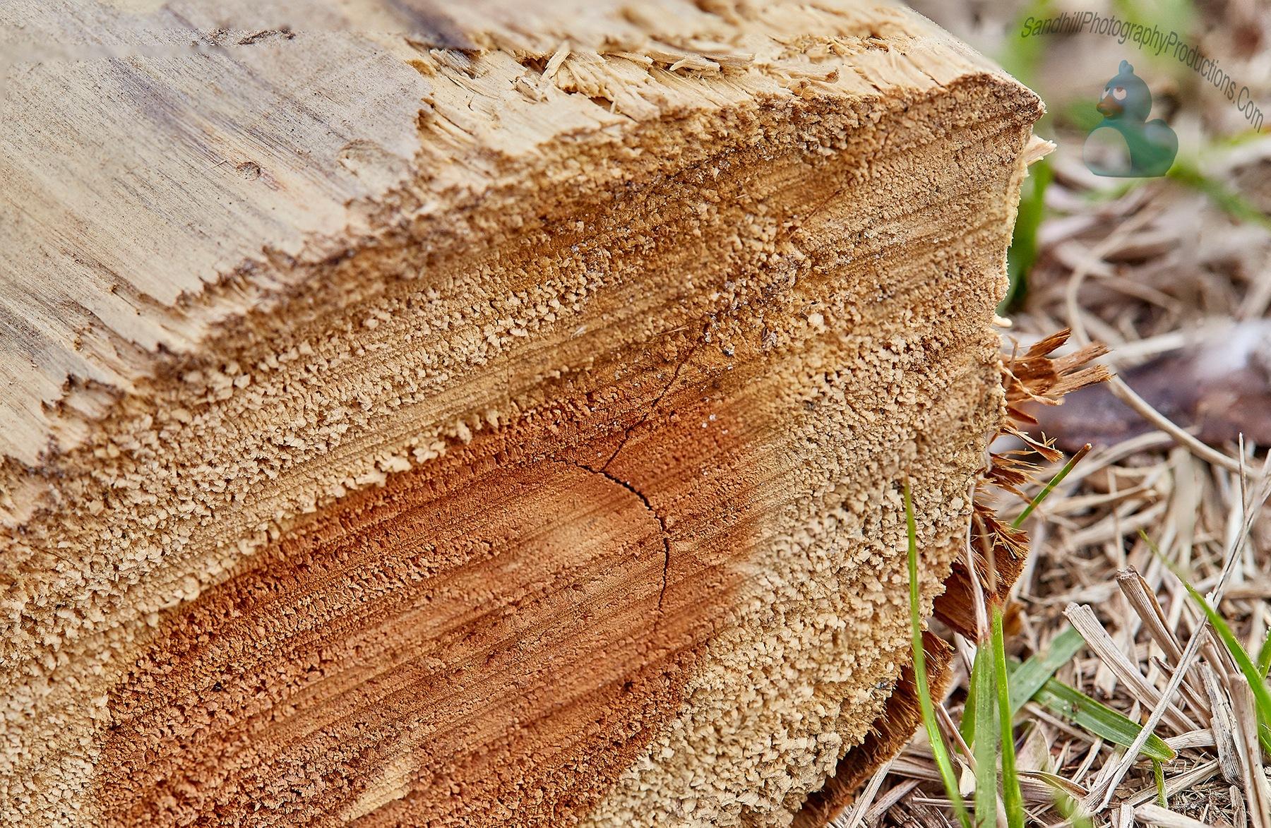 Log by Dan Jankowski