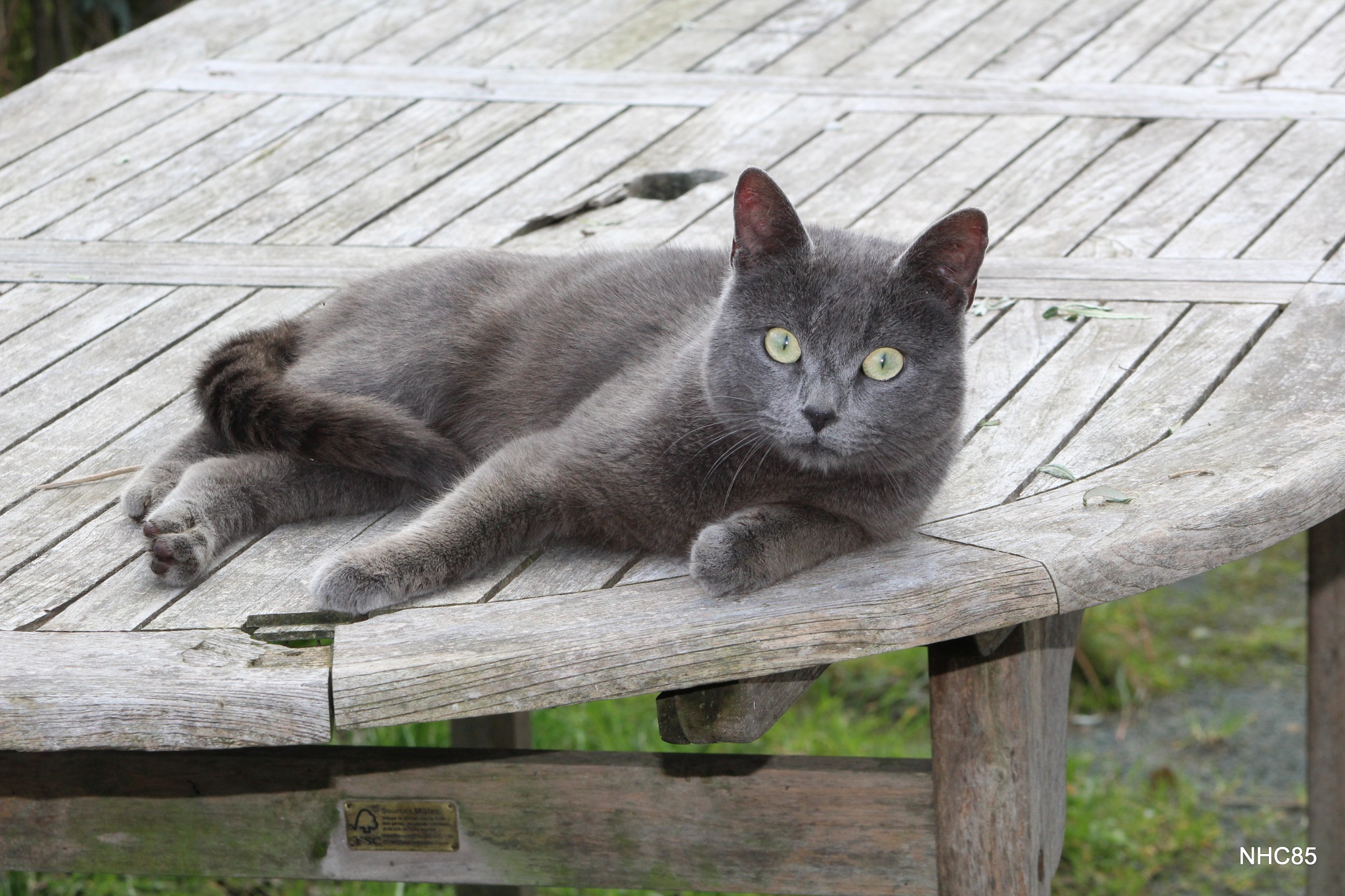 Philéas le chat by NHC85