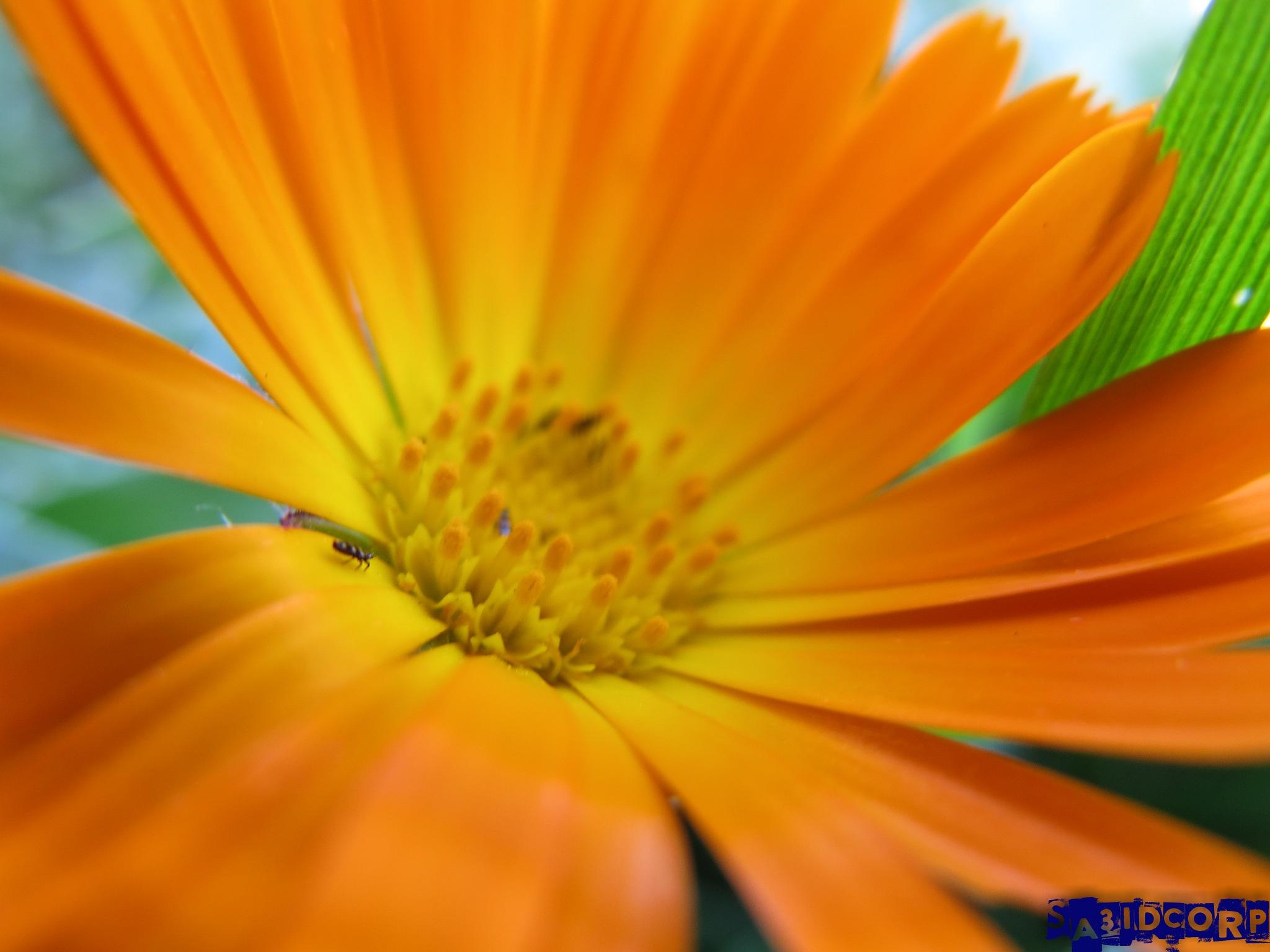 flower shape  by sa3idcorp