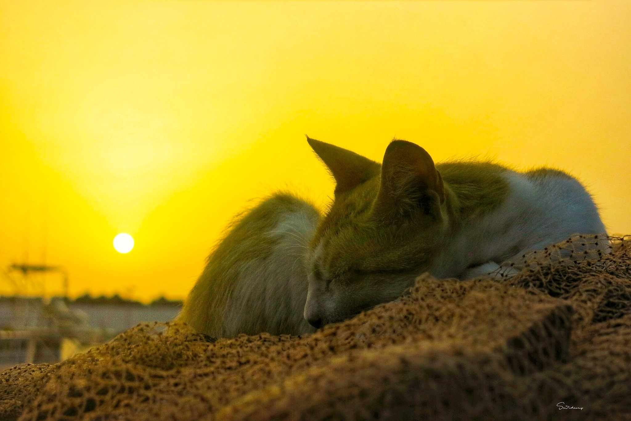 sleepy cat in stora port by sa3idcorp