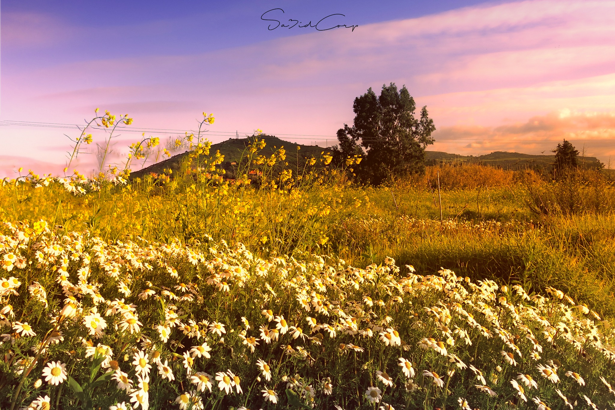 Algeria nature  by sa3idcorp