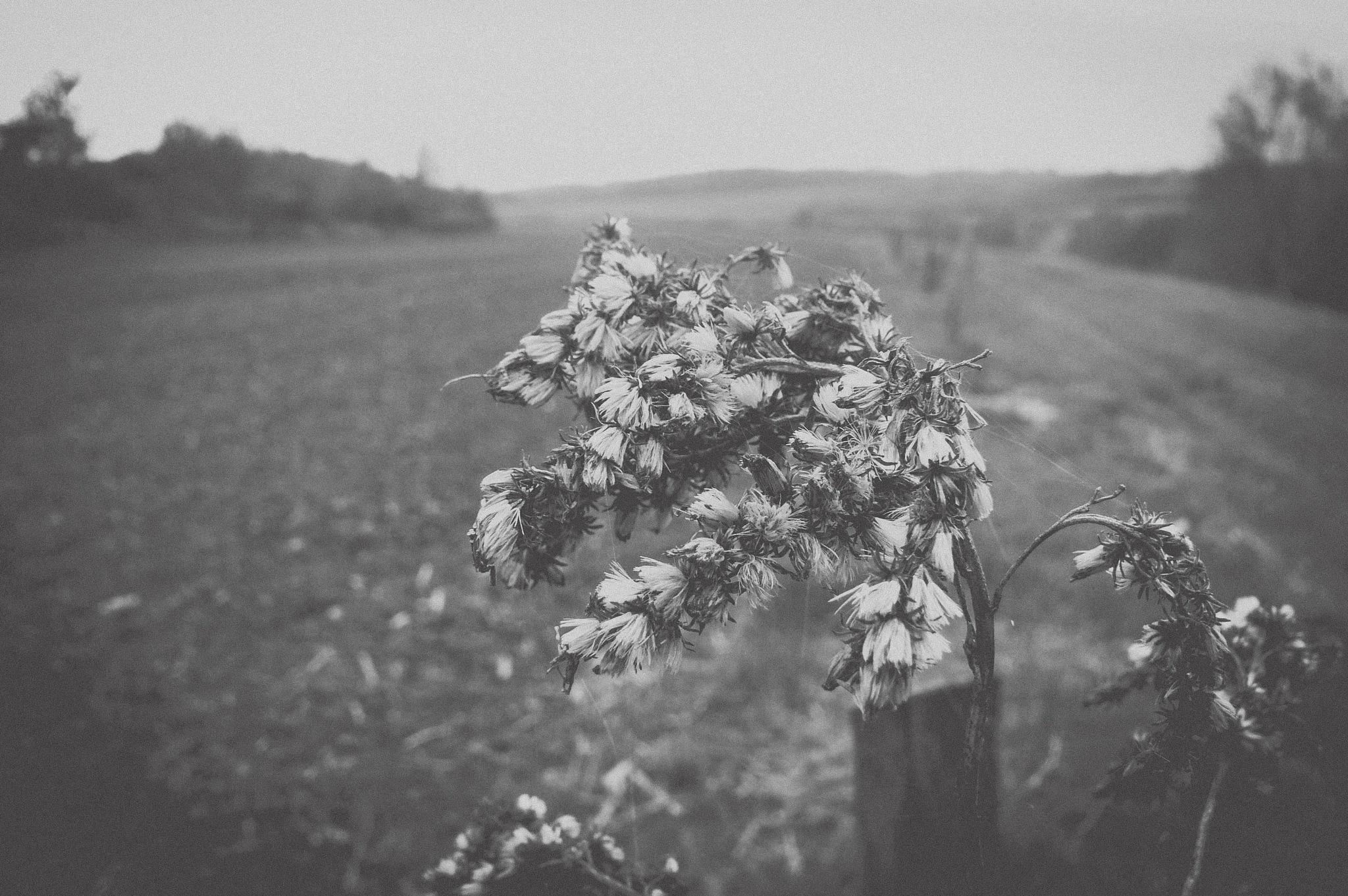 Untitled by Sziszi_photo_art