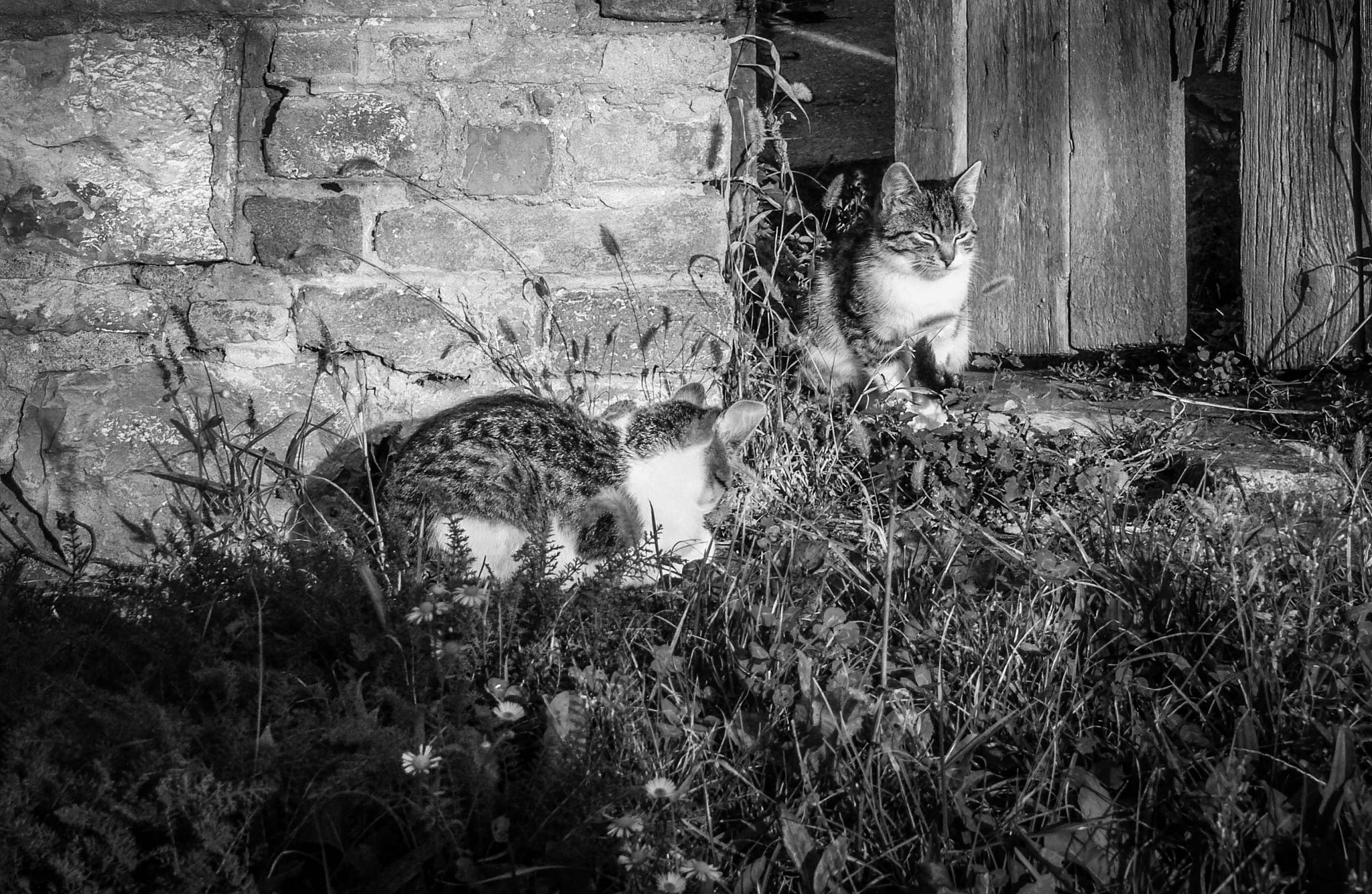 cats by Sziszi_photo_art