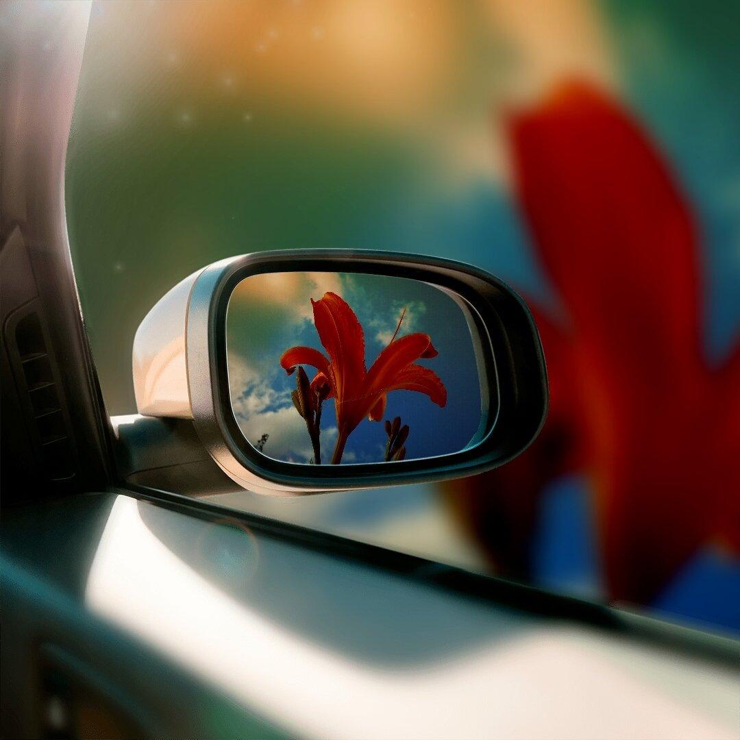 Red flower by Ana-Marija Veg