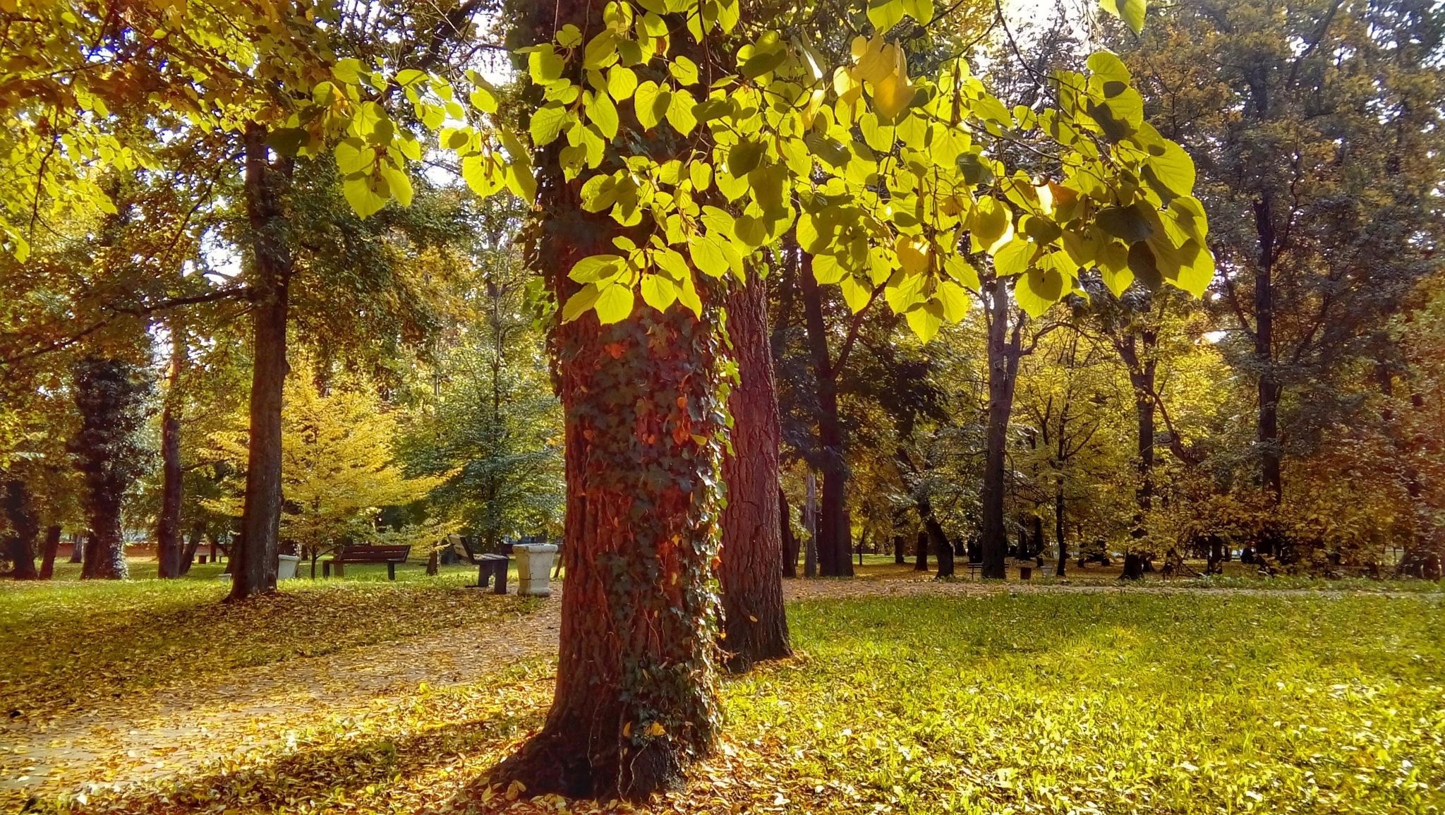Strossmayerov park Đakovo by Ana-Marija Veg