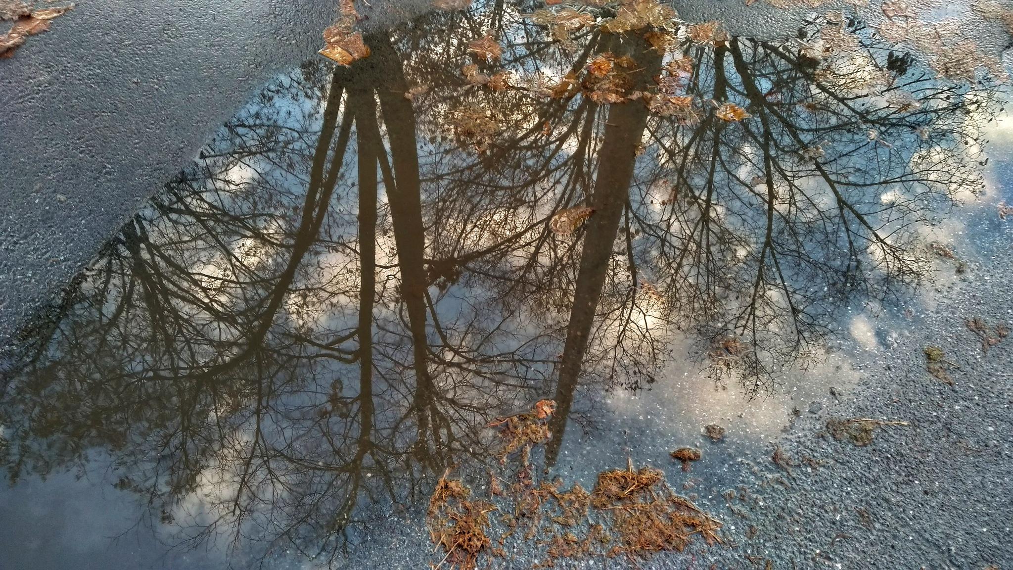 After rain by Ana-Marija Veg