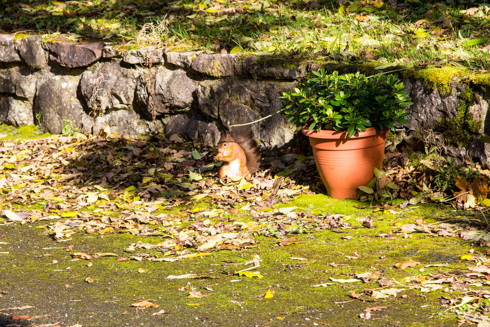 Squirrel by carneyalan
